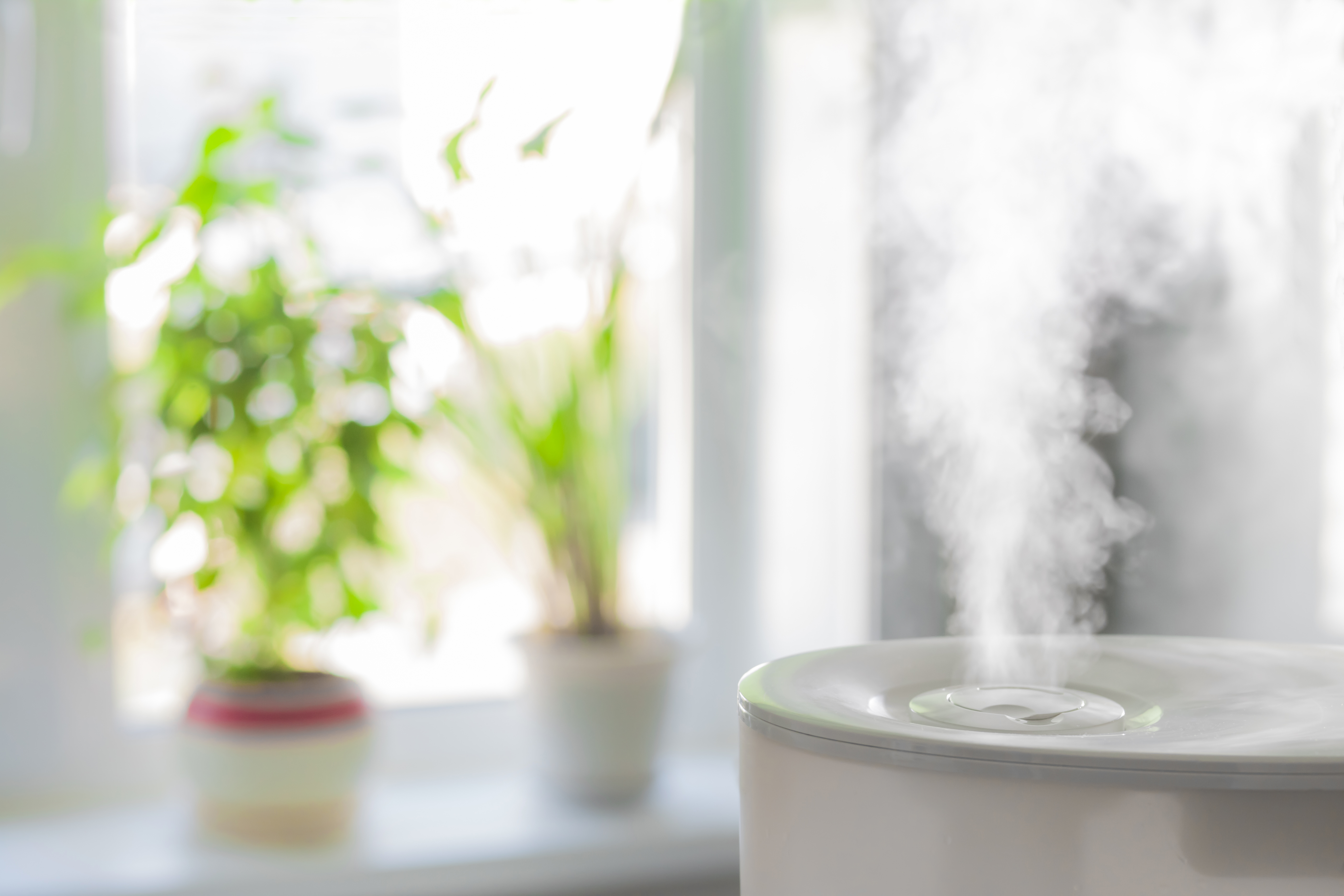 The Creepy Truth About Humidifiers Time