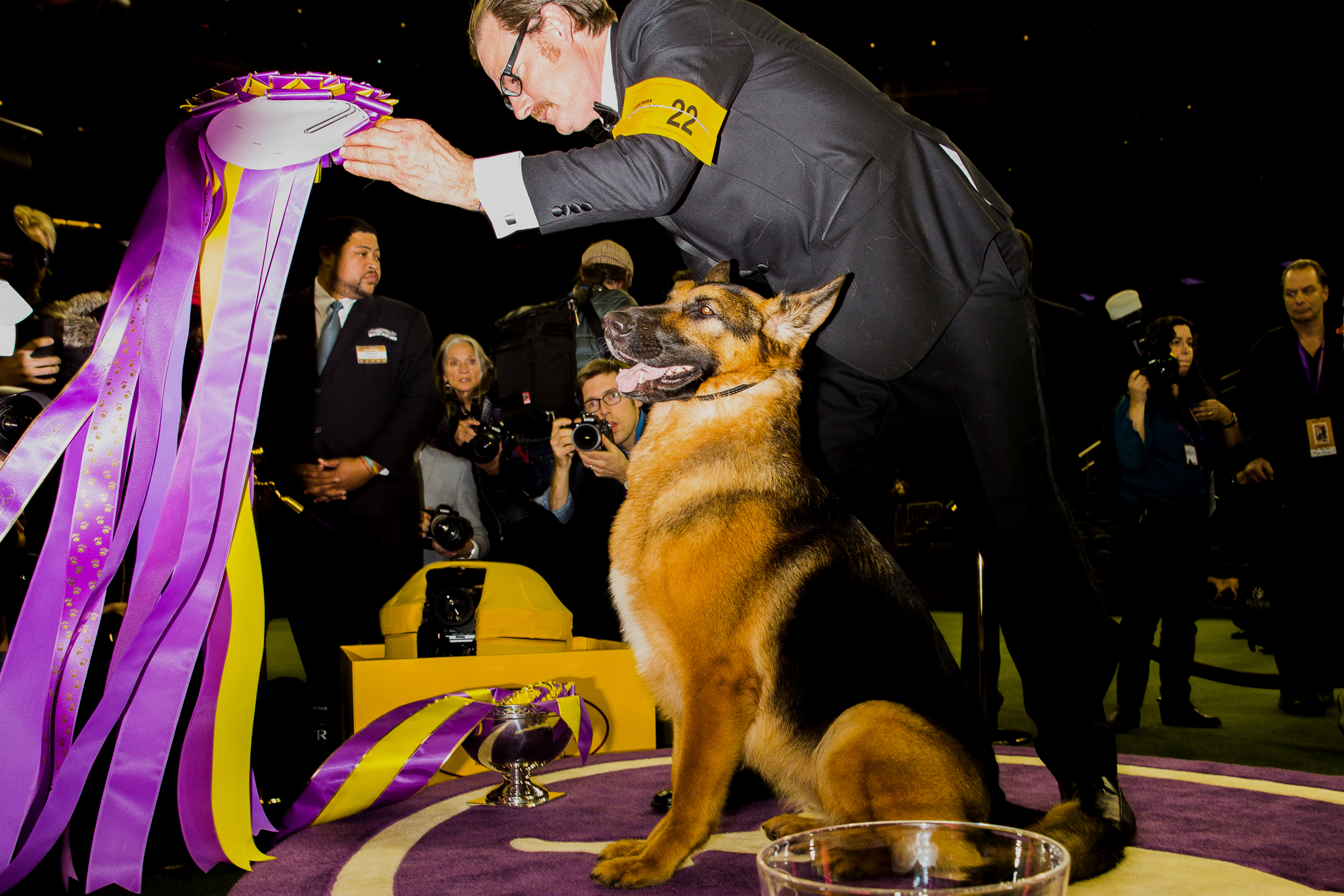 Rumor, a German shepherd, stands next to his handler in the winner's circle after taking the   Best In Show  award at the 141st Westminster Kennel Club Dog Show in New York on Feb. 14, 2017.