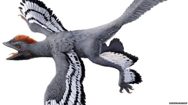 A construct of the Anchiornis dinosaur.