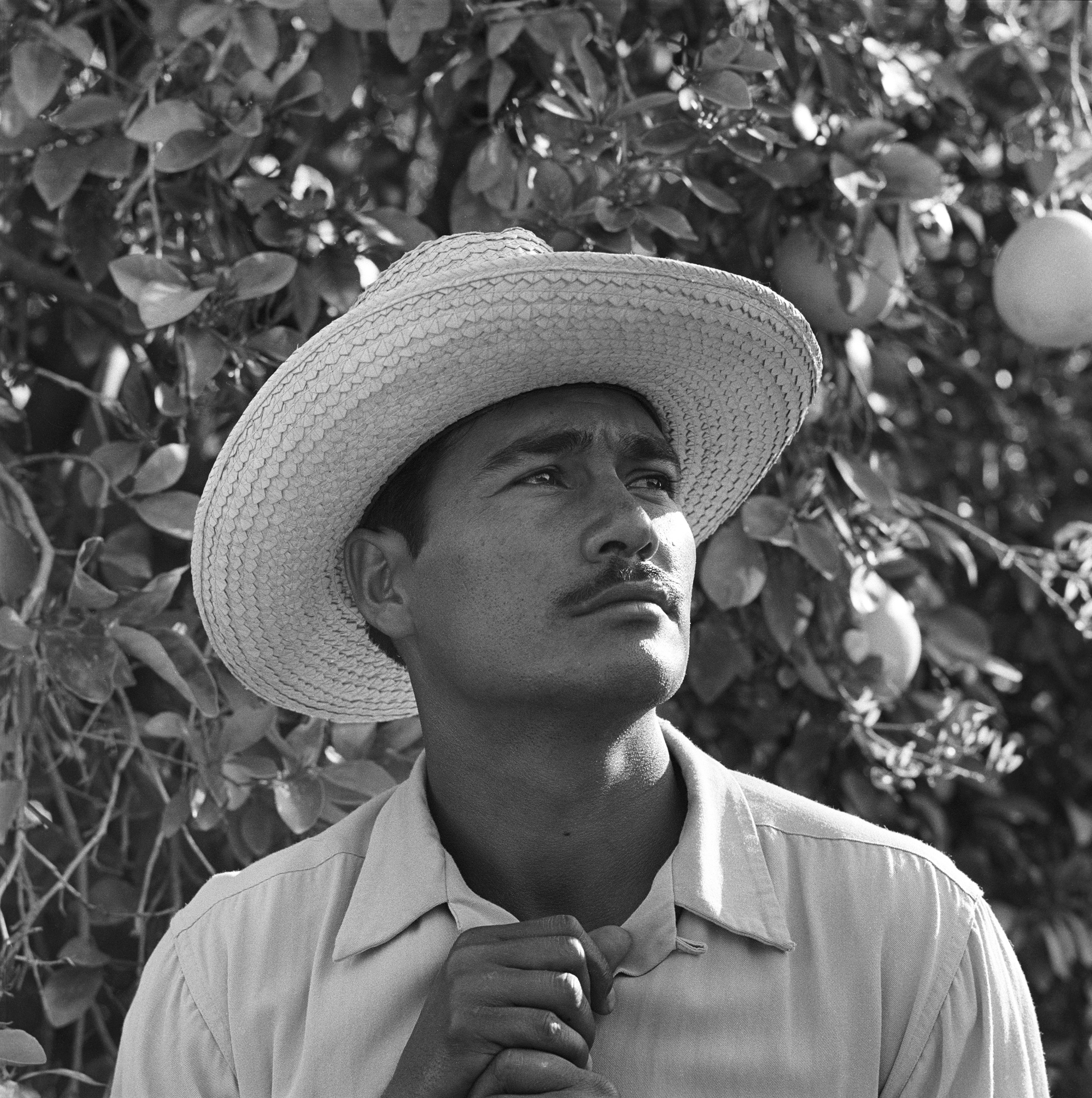 Portrait of Mexican farm laborer, Rafael Tamayo, employed in the United States under the Bracero Program to harvest crops on Californian farms, 1957.