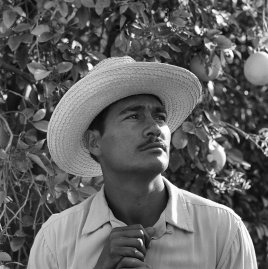 Portrait of Mexican farm laborer, Rafael Tamayo, working in the United States under the Bracero Program, 1957.