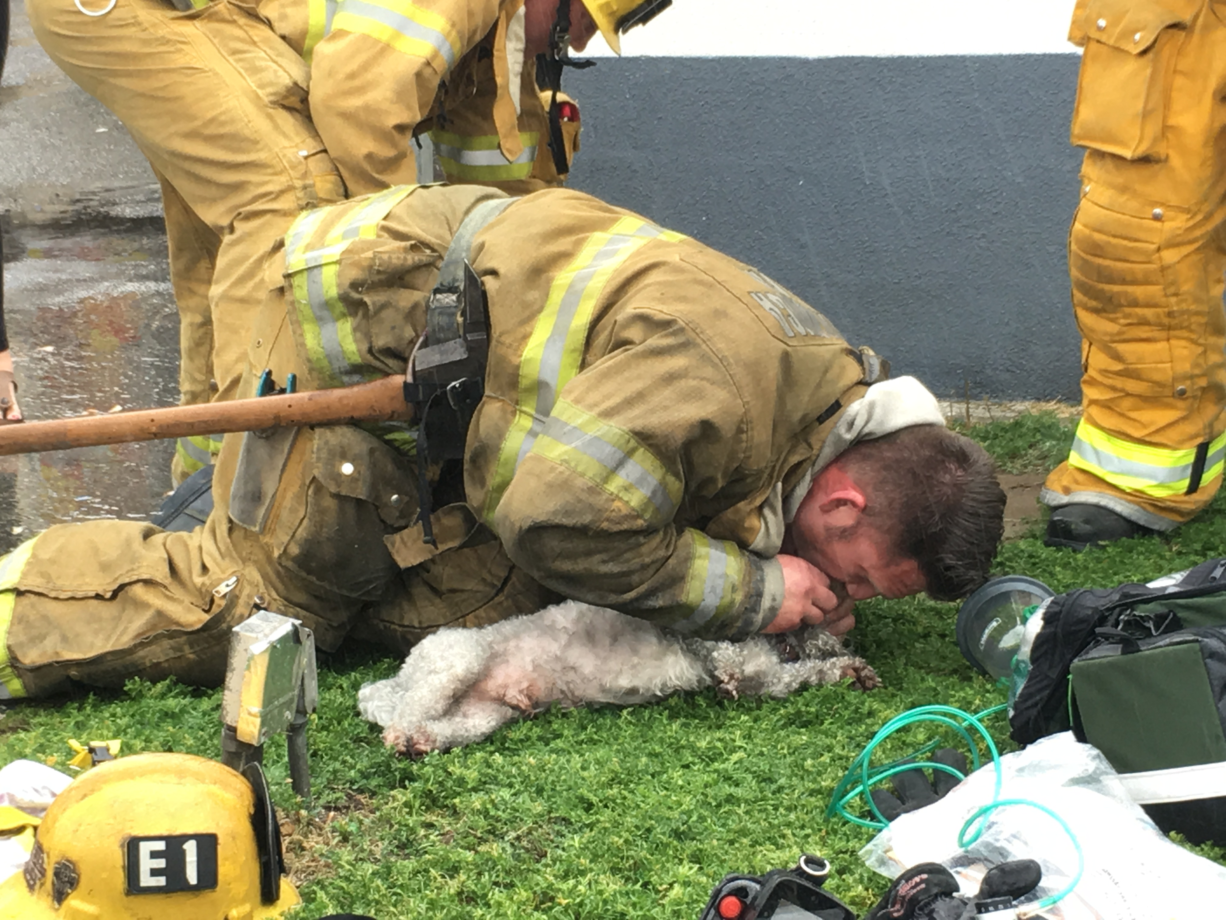 A Santa Monica firefighter resuscitated a dog after performing CPR on it following an apartment fire.