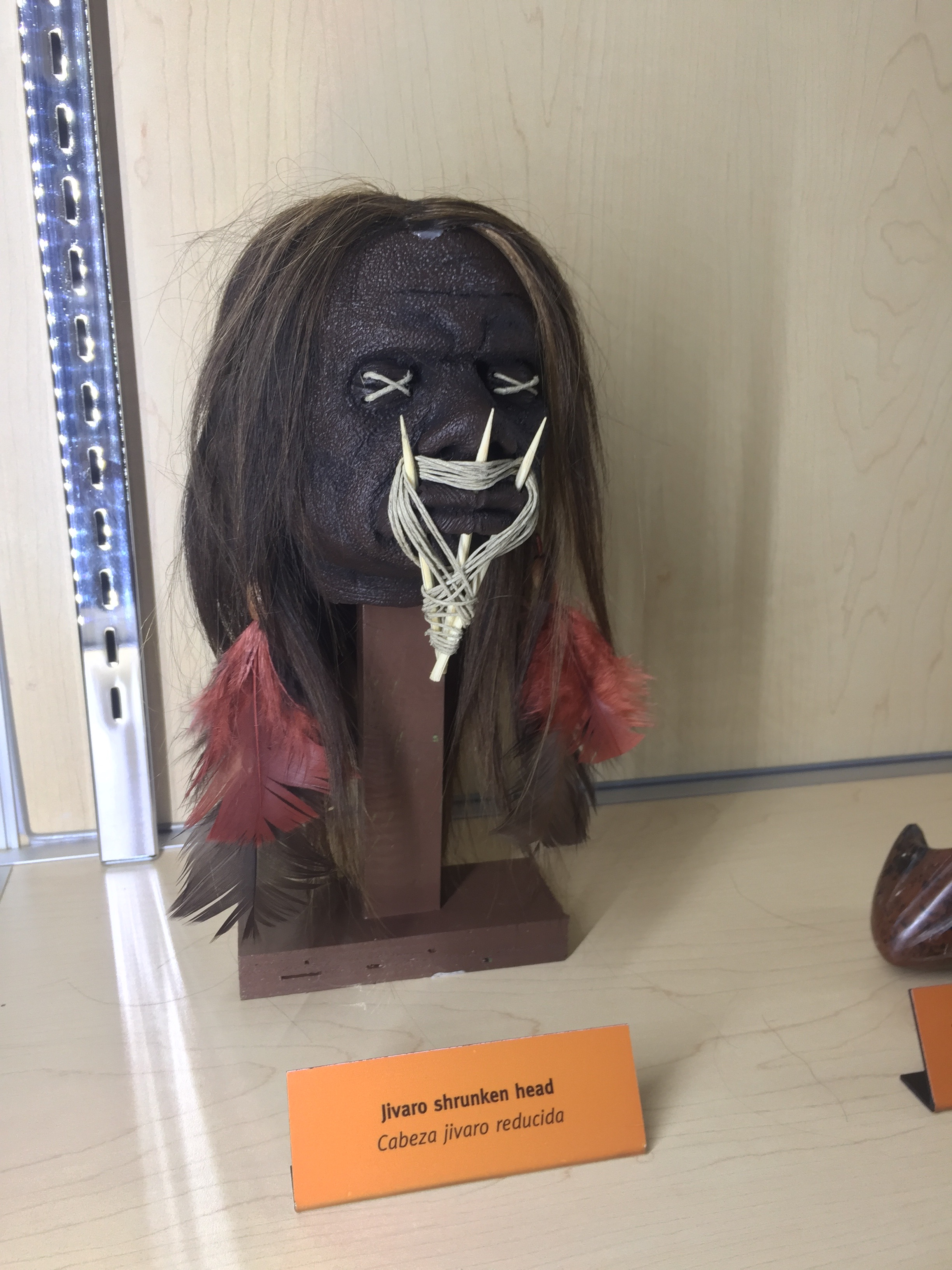 A South American shrunken head on display is a reminder of the cultural context into which cocoa use was born. The exhibit traced the sculptures back to Ecuadorean and Peruvian tribes called  Jivaros.