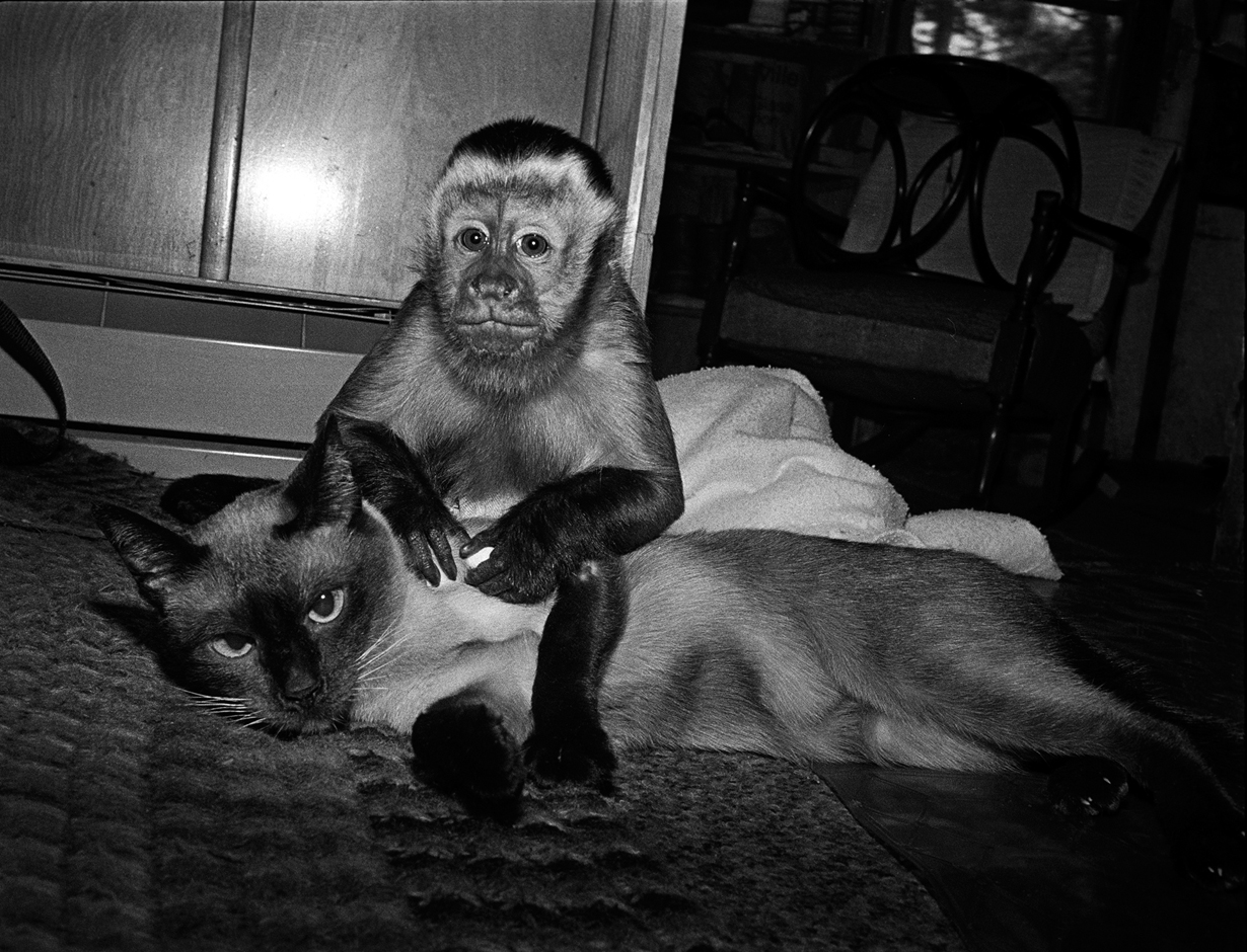 Teddy and Katja, 1988. Tufted capuchin, male, 3 years old; Siamese cat, female, 12 years old.