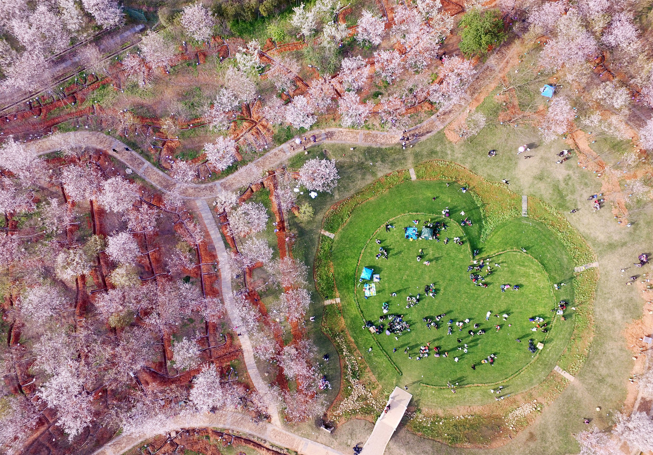 An aerial photo taken on March 26, 2017 shows a heart-shaped rest area surrounded by cherry blossoms in Fenghuanggou Scenic Spot of Nanchang County, east China's Jiangxi Province.
