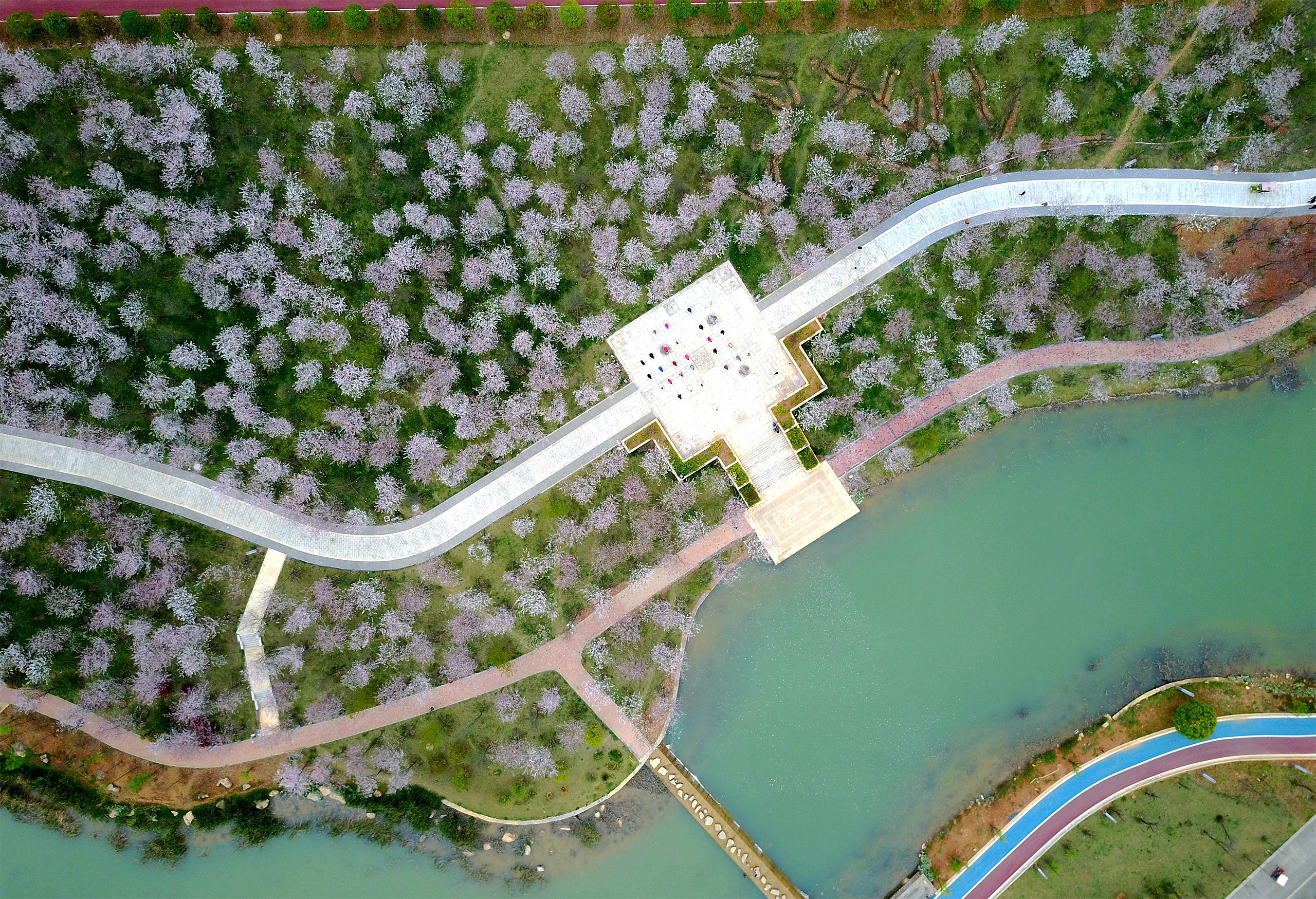 A photo taken on April 2, 2017 shows the aerial view of the cherry blossoms in Yilong New Area of the Bouyei-Miao Autonomous Prefecture of Qianxi'nan, southwest China's Guizhou Province.