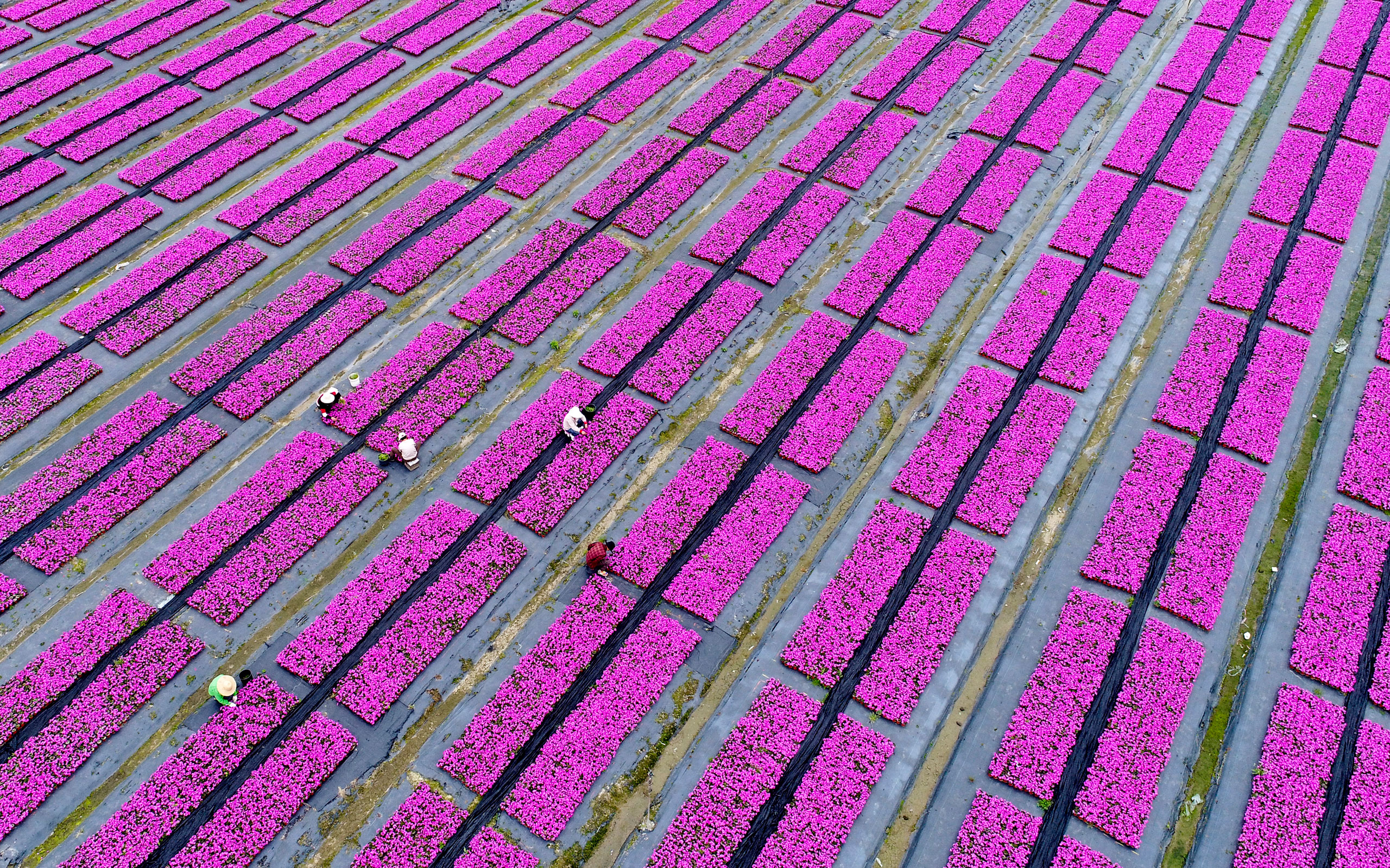 An aerial view of gardeners arranging flowers in Hangzhou, Zhejiang Province of China on April 4, 2017.