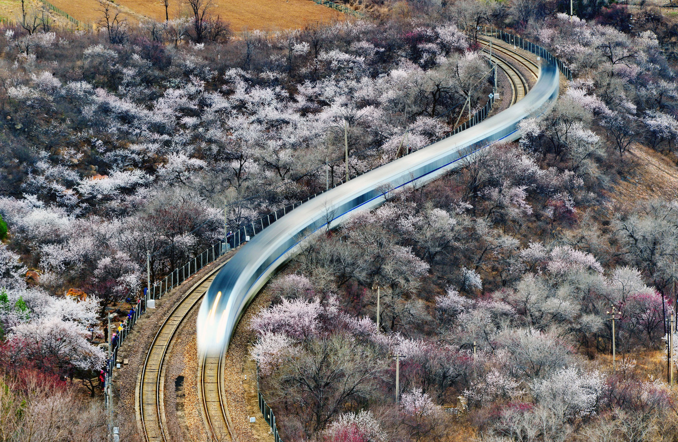 A train runs through a field of peach flowers near the Juyongguan Pass of the Great Wall in Beijing on March 26, 2017.