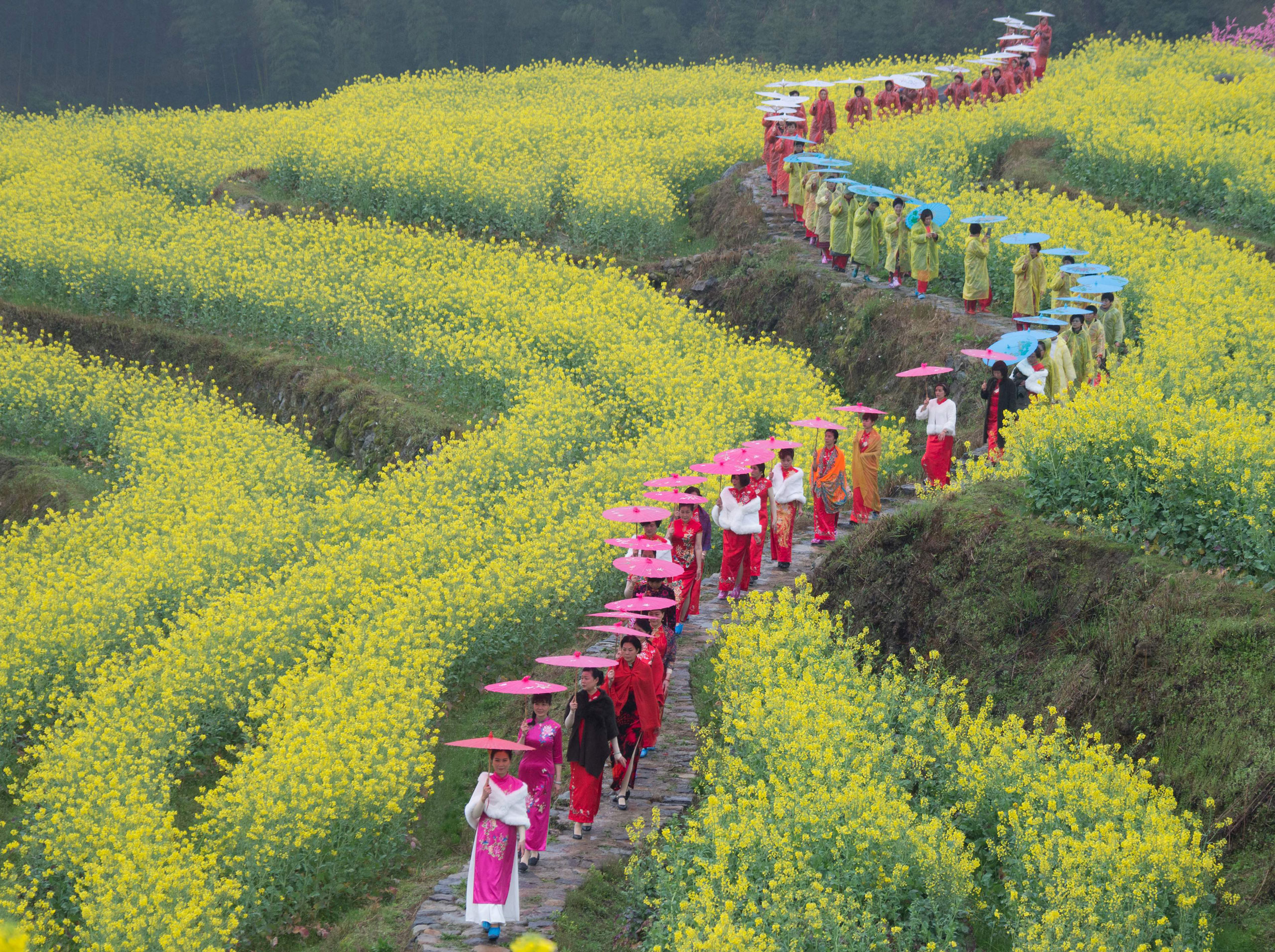 Cheongsam fans walk on the terrace fields of cole flowers at Lishantou Village in Longquan City, east China's Zhejiang Province on March 22, 2017.