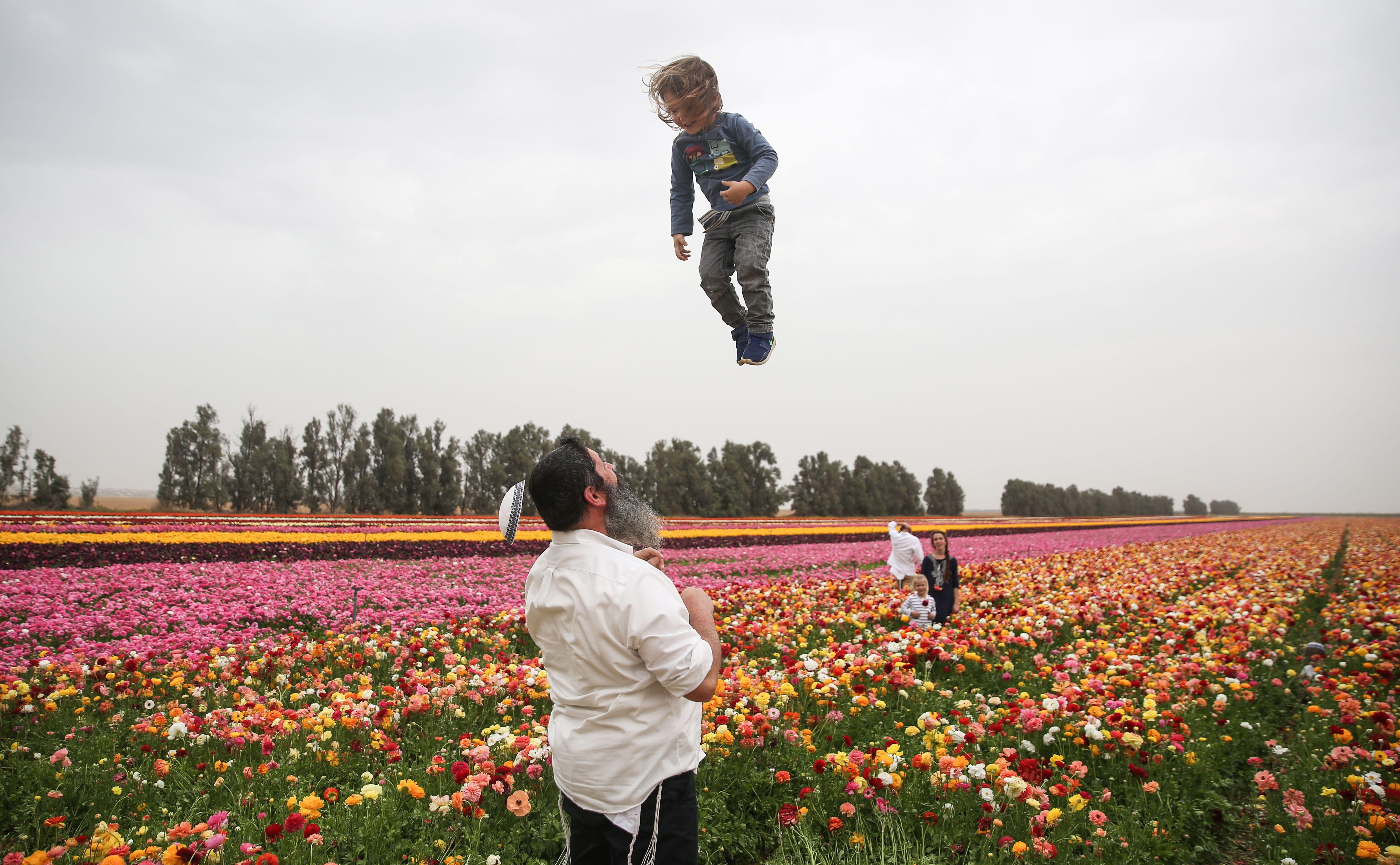 An Israeli man playfully throws a child as his kippah falls off in a field of ranunculus flowers in the southern Israeli Kibbutz of Nir Yitzhak, located along the Israeli-Gaza Strip border on April 12, 2017.