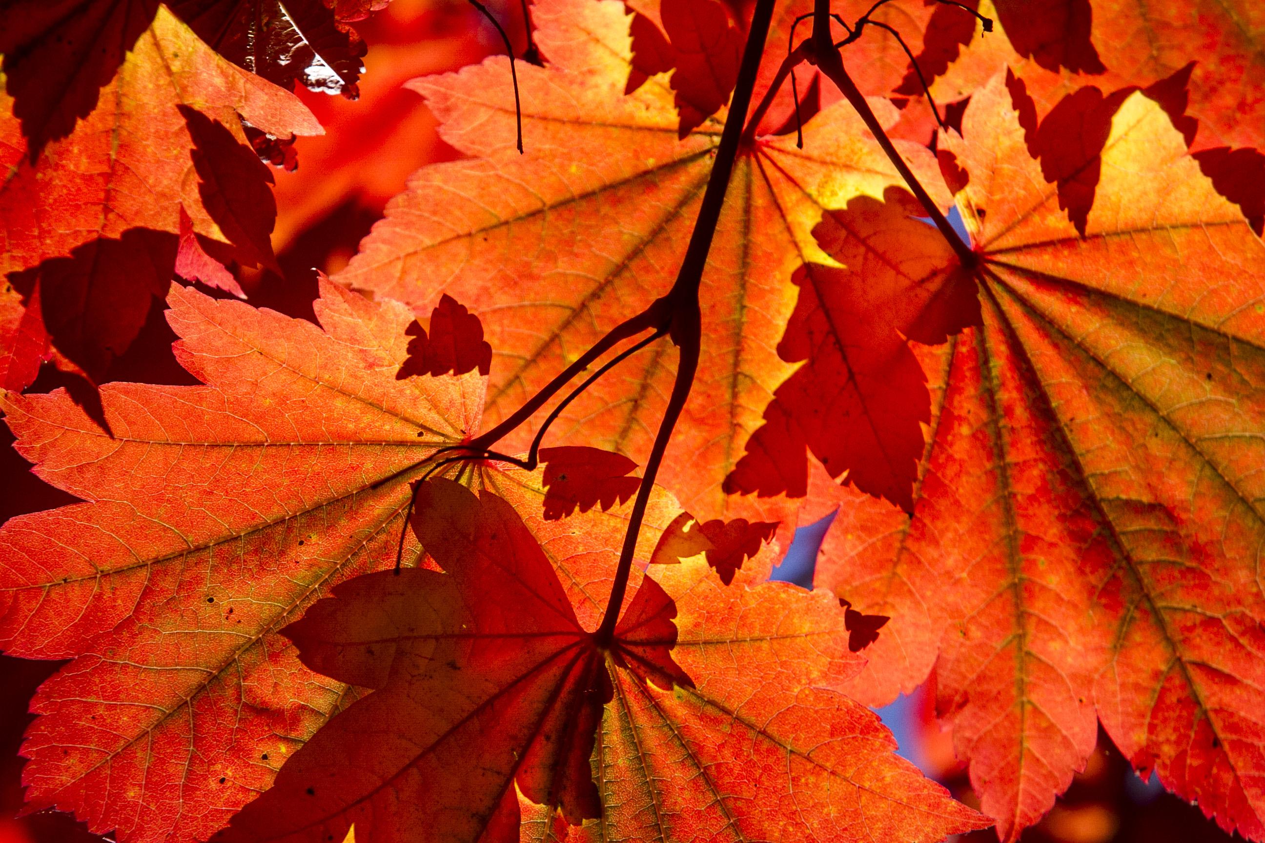 Autumn baby? Go ahead and brag.