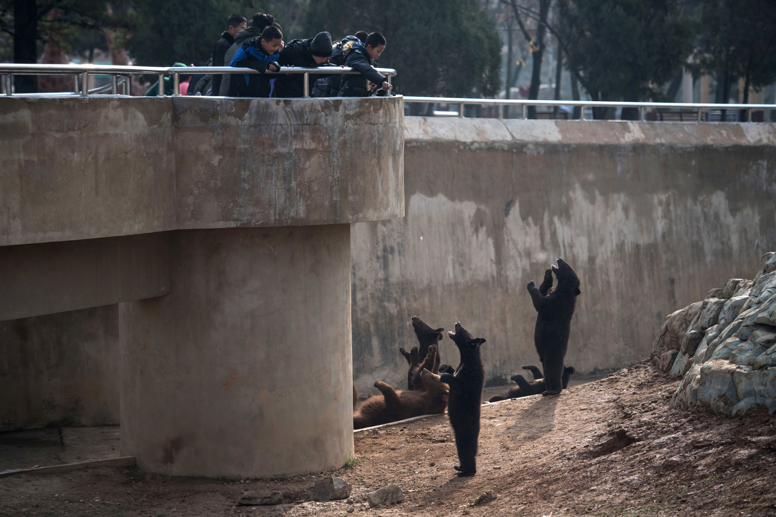 Children throw snacks to bears in an enclosure in the Central Zoo on the outskirts of Pyongyang on Nov. 27, 2016.