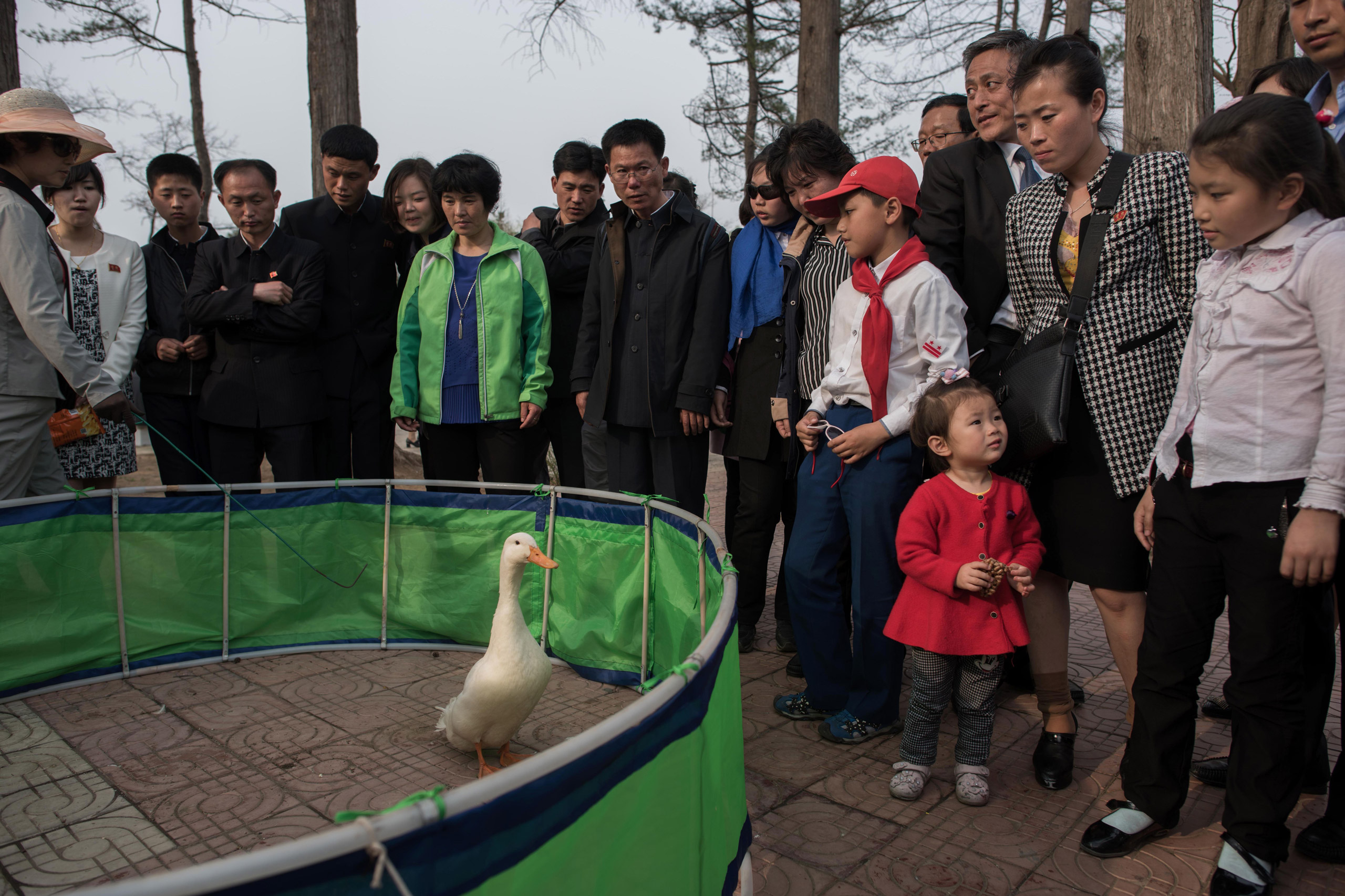 People gather around a pen for a game involving a goose in which contestants attempt to throw rings around its neck at the Central Zoo in Pyongyang on April 16, 2017.