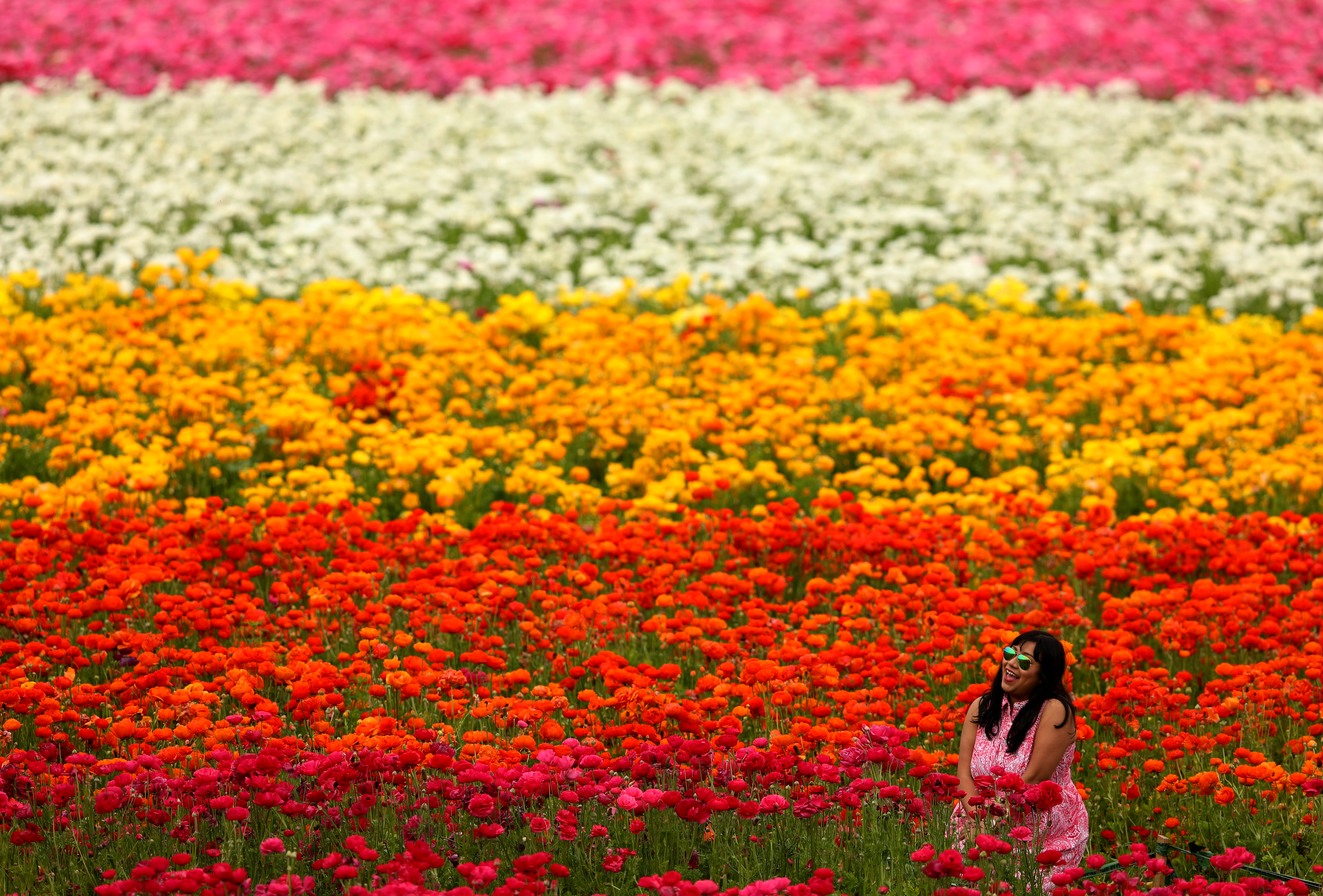 A  women sits in a field of giant tecolote ranunculus flowers at the Flower Fields in Carlsbad, Calif. on March 20, 2017.