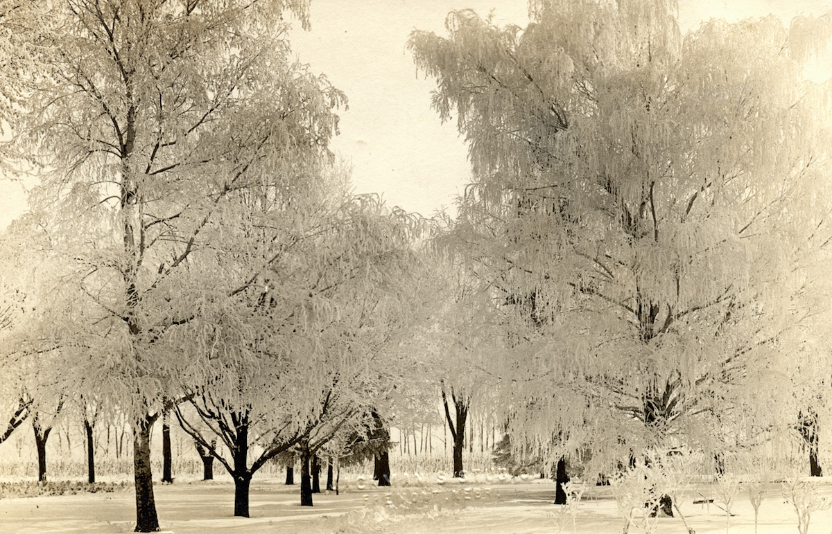 Trees in Nebraska, after an ice storm, in the early 20th century.