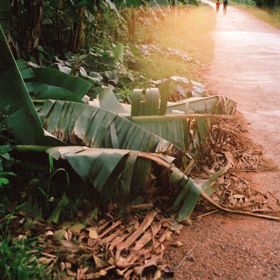 08-Mimi-Cherono-Ng-ok-Untitled-2014-palm-tree