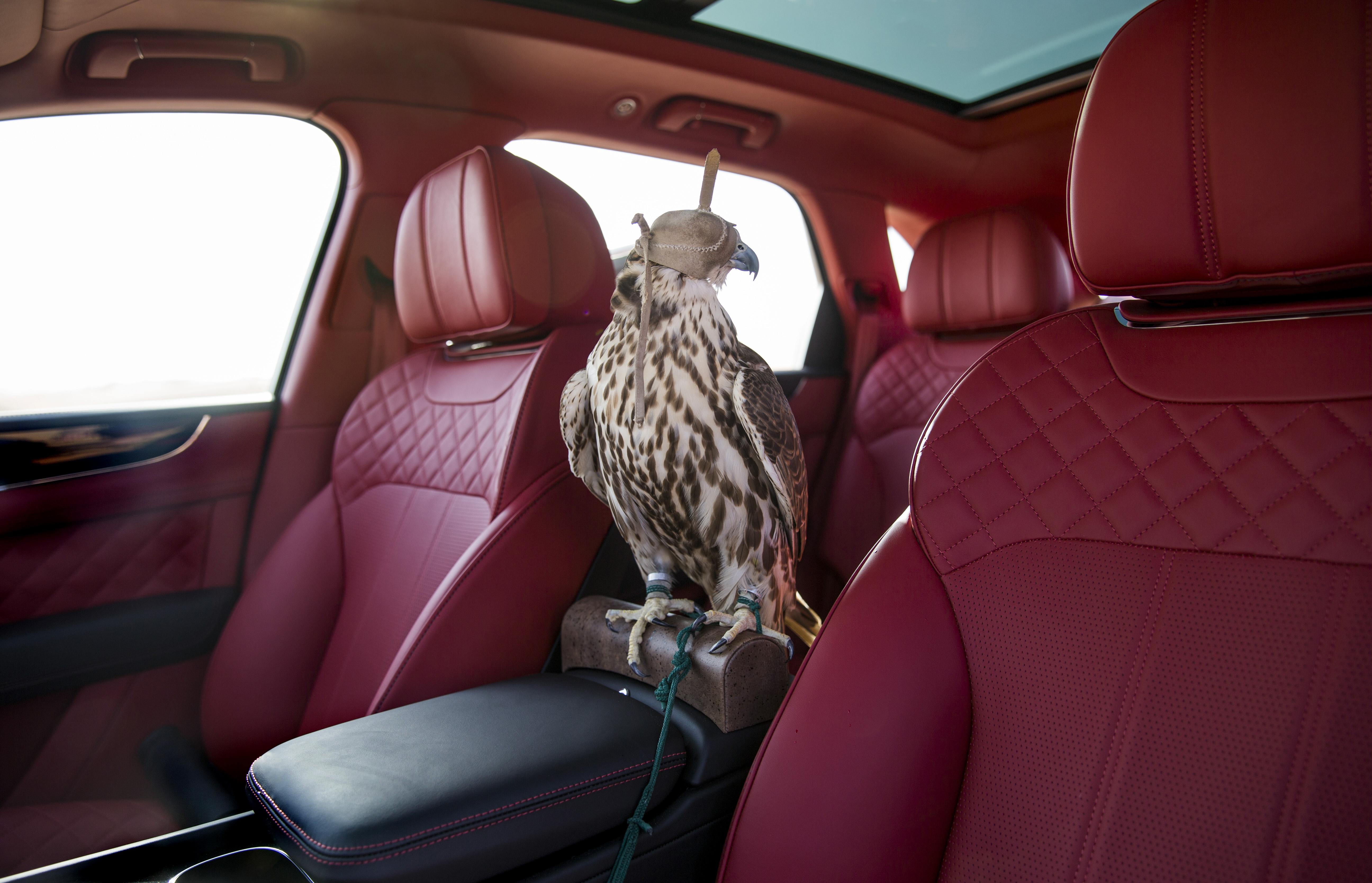 Bentley Falcon Suv For Luxury Car Birding Time