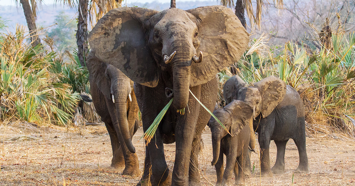 An elephant family in Zimbabwe.