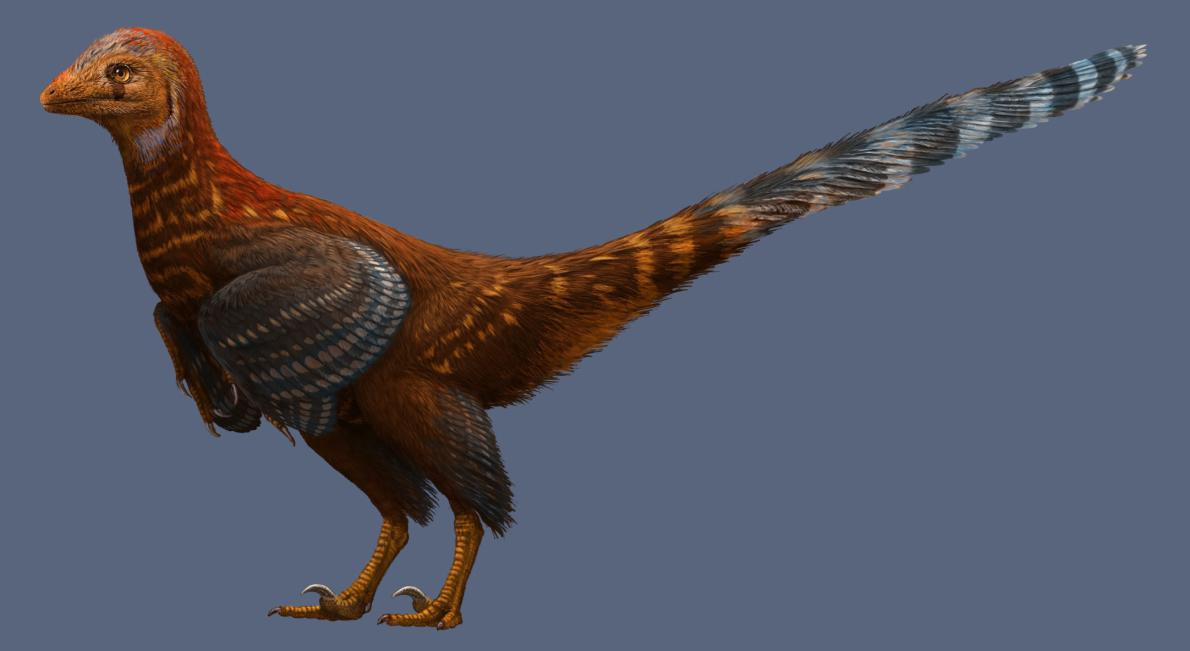 An illustrated life reconstruction of Jianianhualong tengi shows off its asymmetrical feathers.