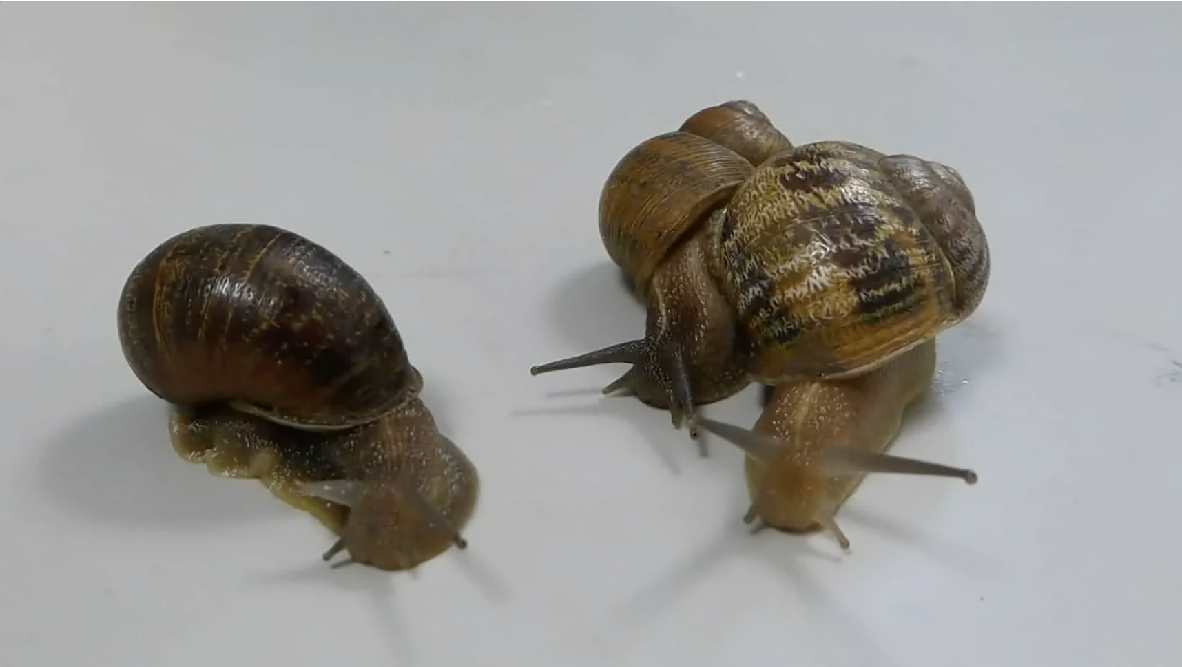 Jeremy the snail turns away as two snails, sent to him as potential mates, decide to mate with each other instead.