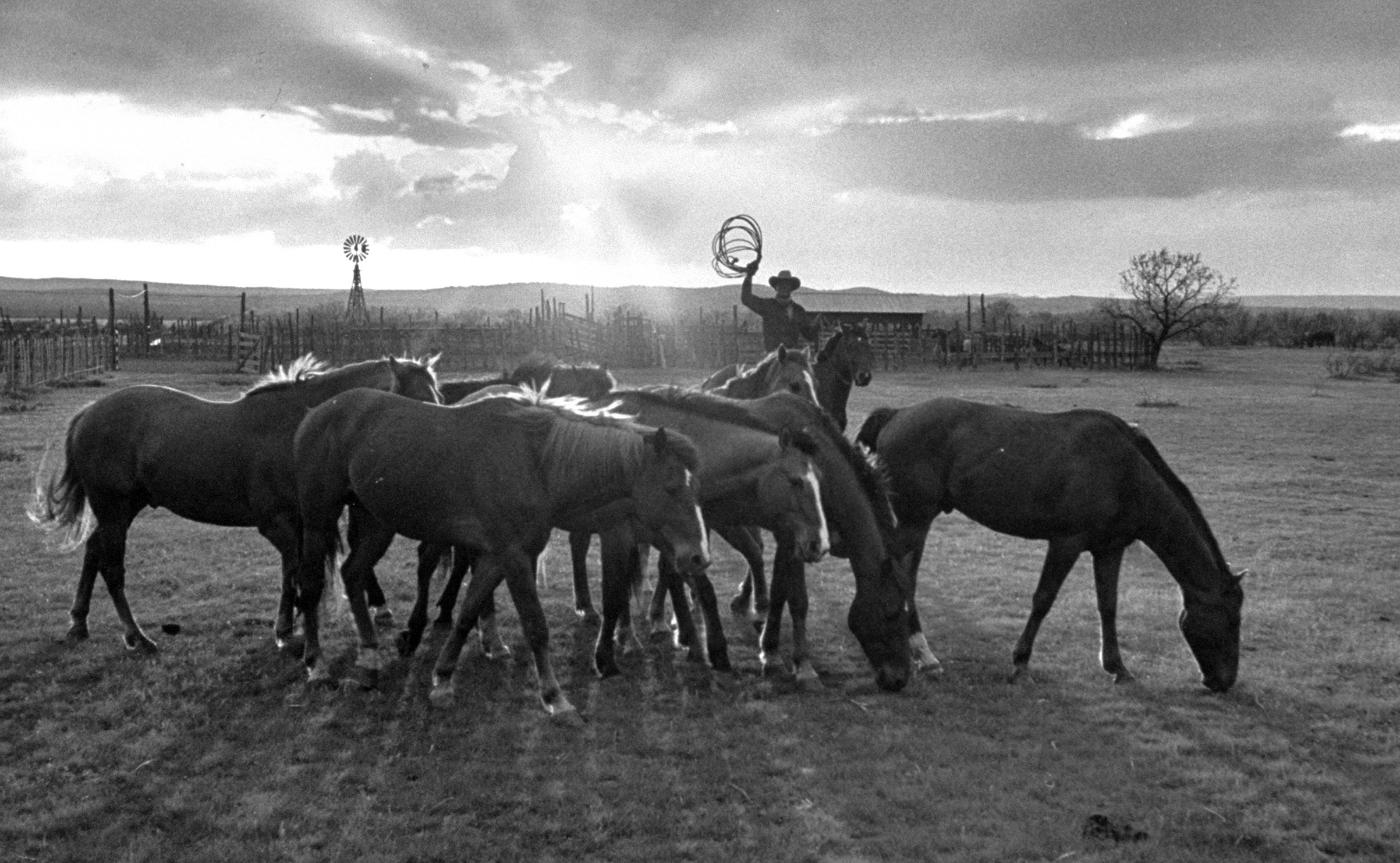 Caption from LIFE. At sunset after a day's work, he collects his string of horses, considers which of the young ones to pick for a training session.