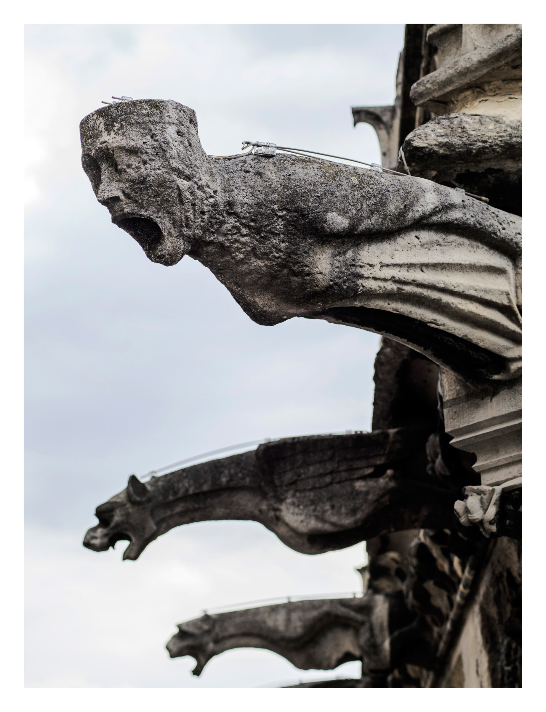 Many of Notre Dame's gargoyles, which act as rain spouts, have corroded and been replaced with PVC tubes, July 2017.