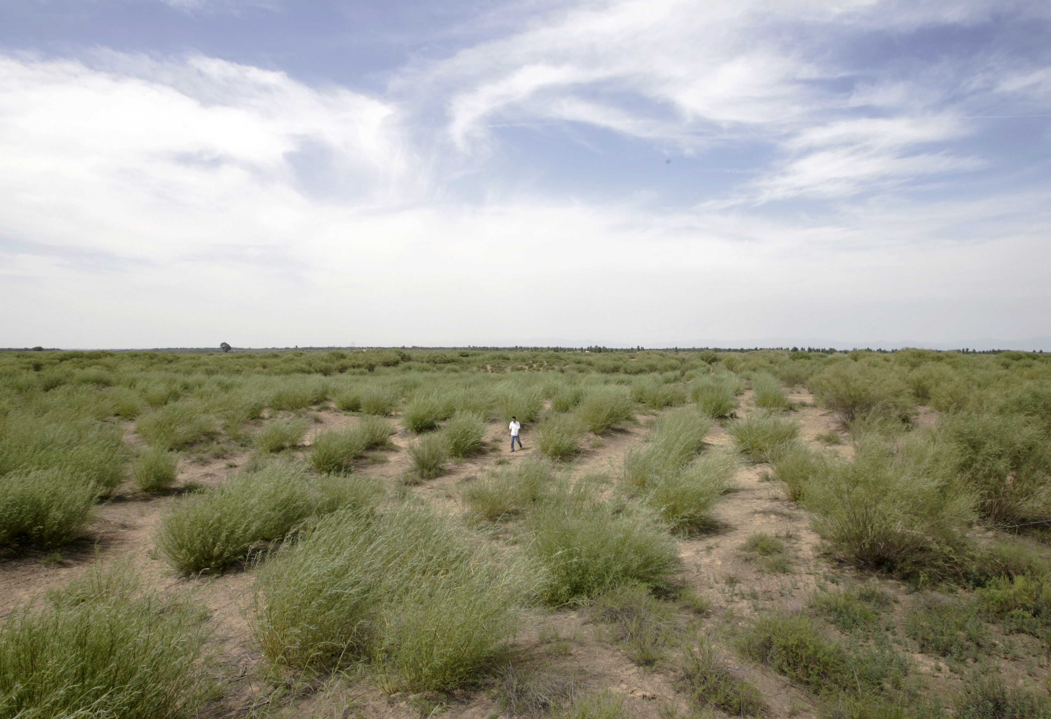 A file photo shows the transformation of the Kubuqi Desert on the outskirts of Dalate county in north China's Inner Mongolia Autonomous Region on July 11, 2007.