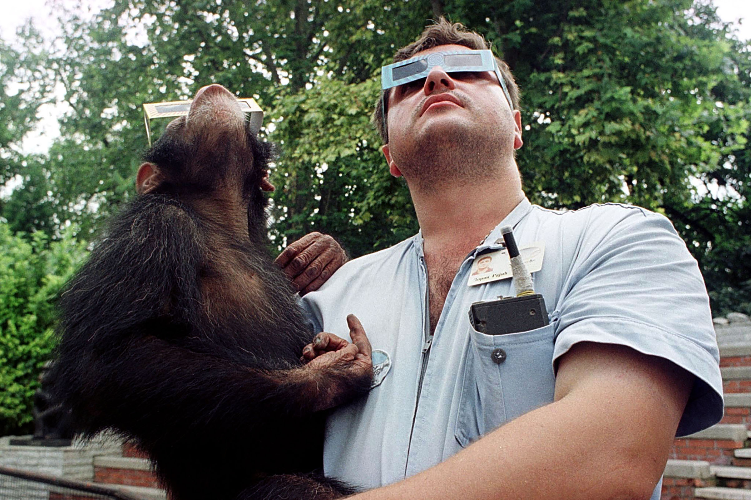 A Belgrade zookeeper holds a young chimpanzee Olgica wearing solar viewing glasses while they look up into the sky to watch the solar eclipse as it passes over the Yugoslav capital.