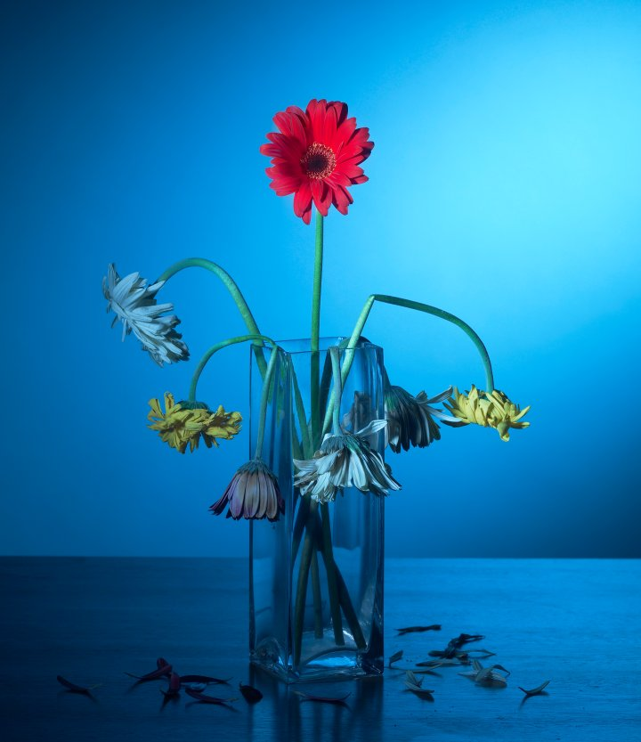 Red flower in glass vase