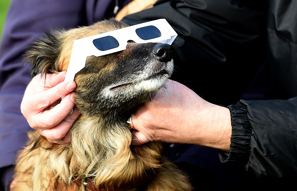 People use protective glasses on their dog during a partial solar eclipse in Liverpool on March 20, 2015.