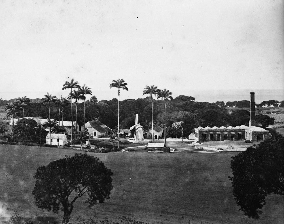 Sugar plantation, Barbados, circa 1870