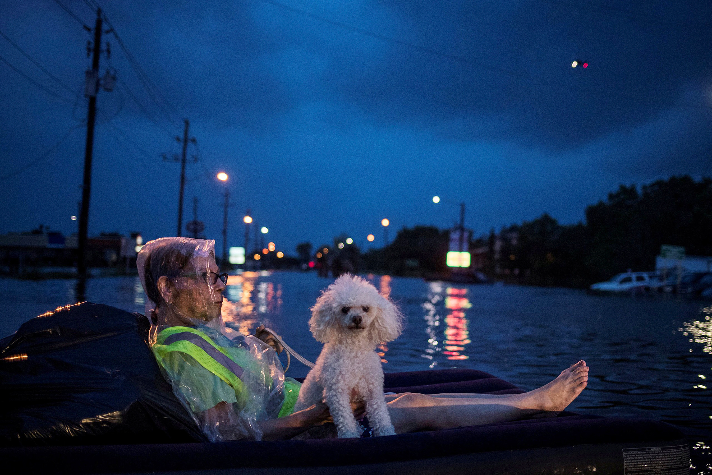 With an air mattress as a life raft, a survivor and her dog await recovery; a rescue helicopter hovered nearby
