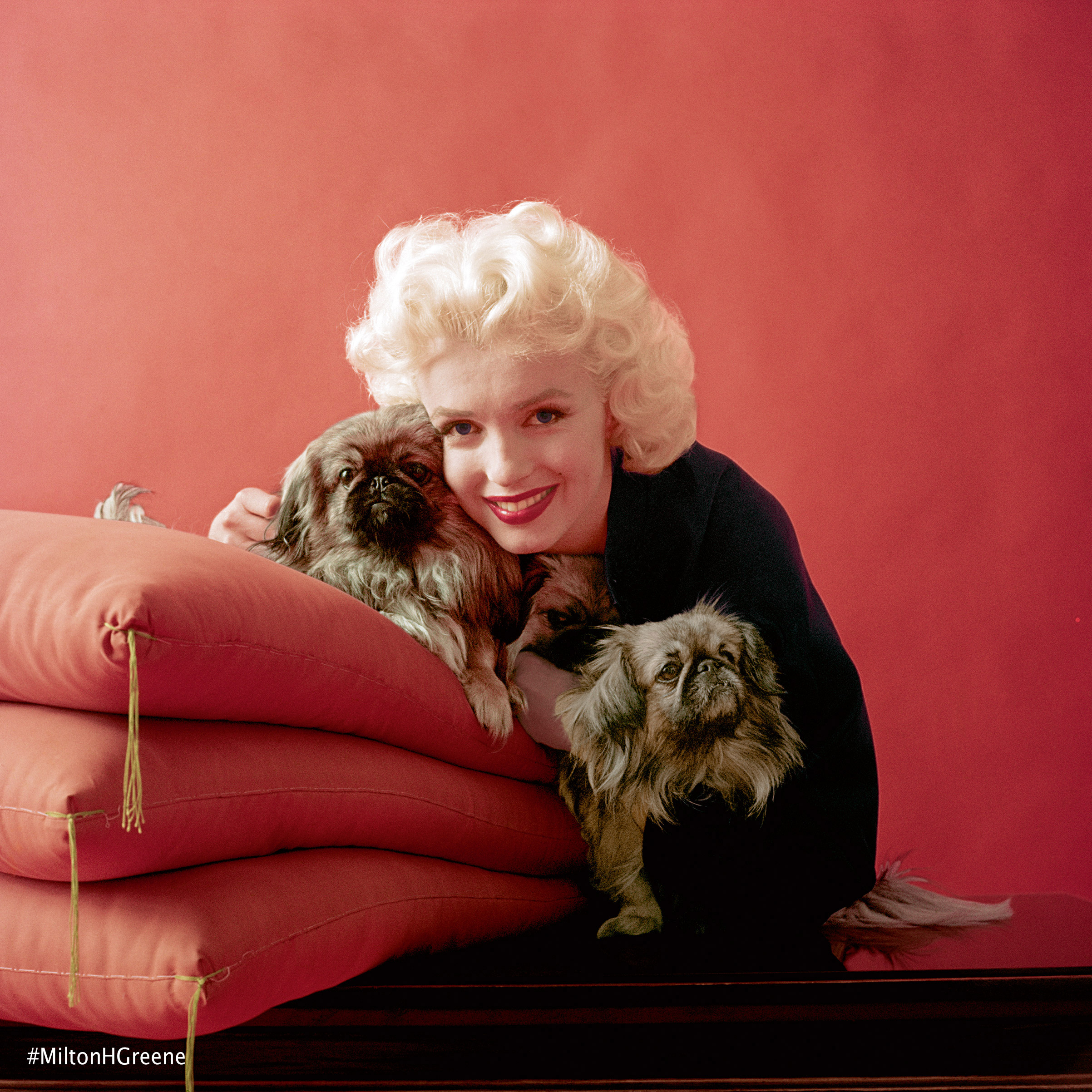 Marilyn Monroe from the February 1955 Oriental session for Look magazine. Photographed by Milton H. Greene ©2017 Joshua Greene archiveimages.com