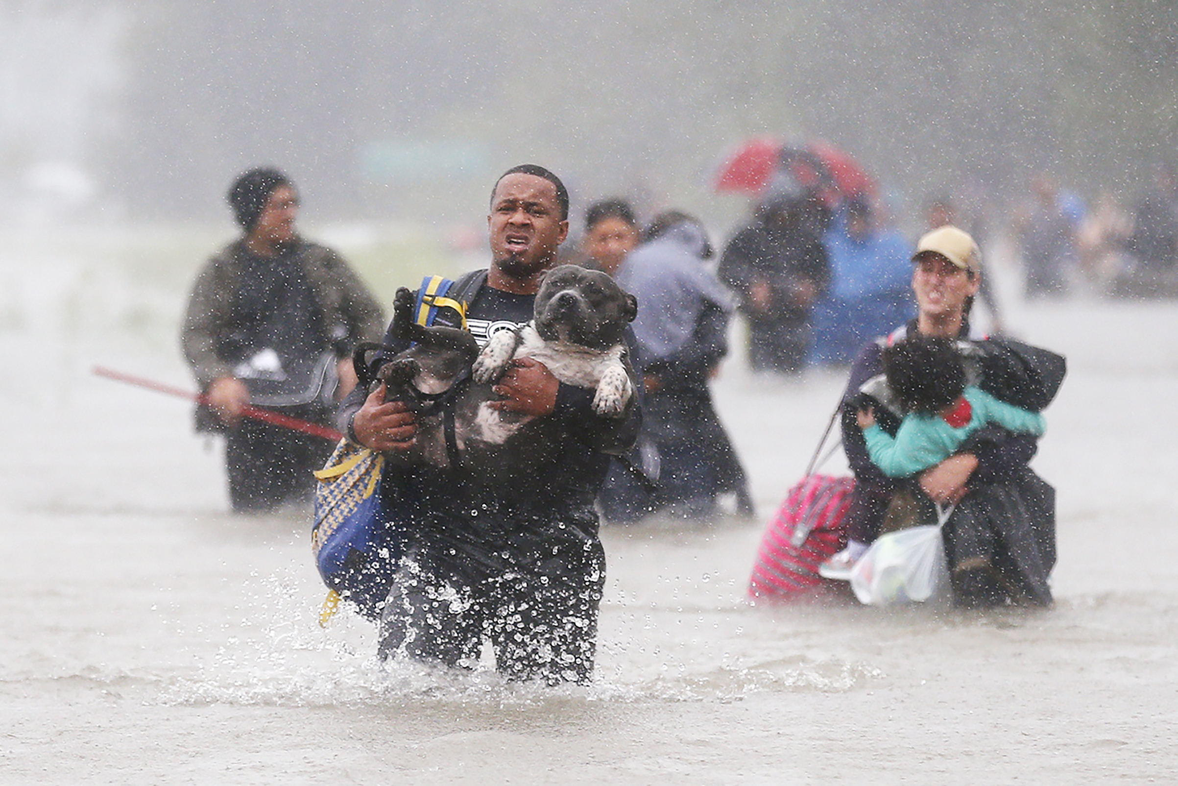 Isiah Courtney carries his dog through floodwaters in this news photograph that sparked an outpouring of support