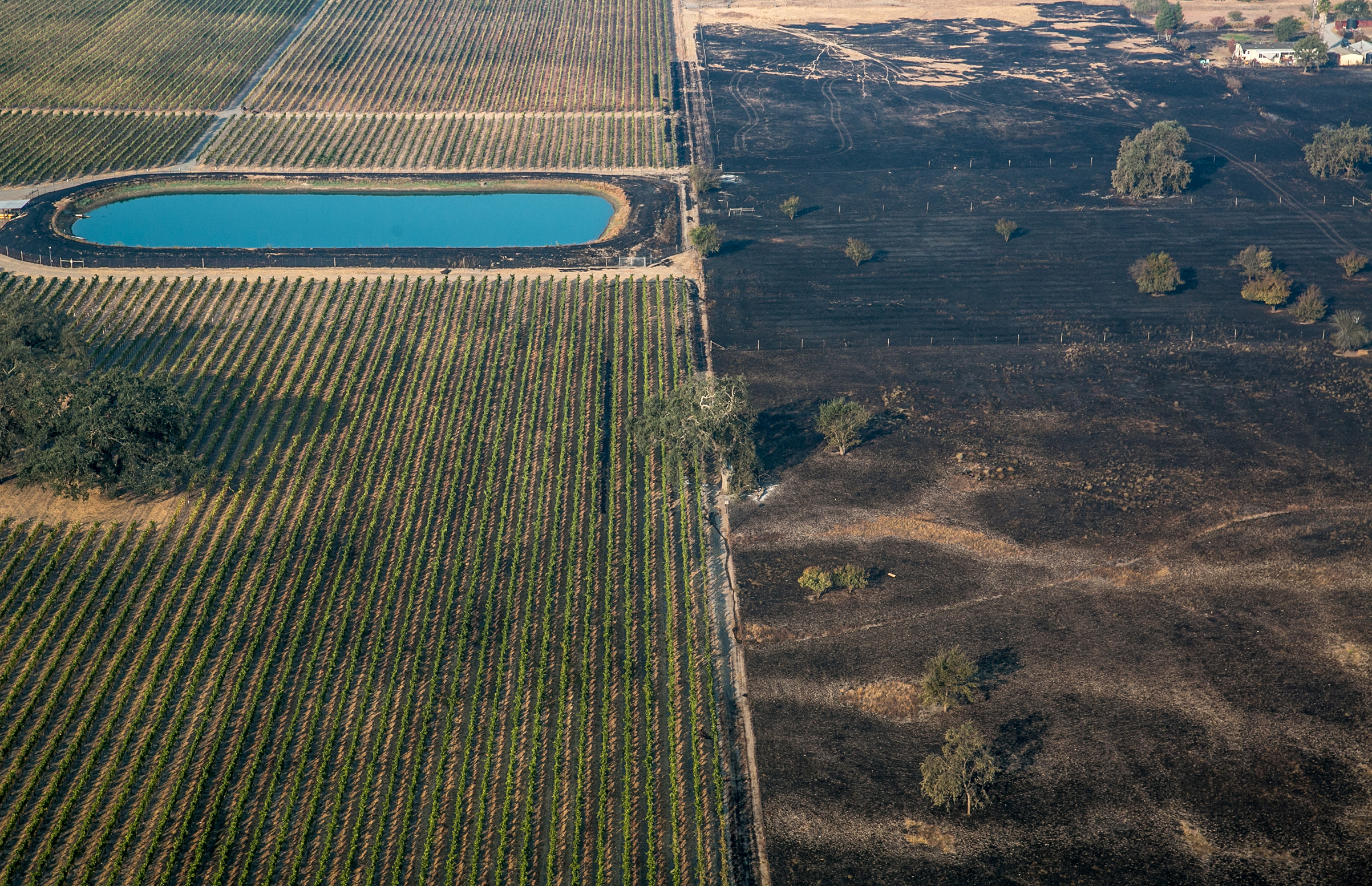 An aerial photo shows the wildfire burning itself out at the edge of grape vineyard on Oct. 11, 2017, in Santa Rosa, California.