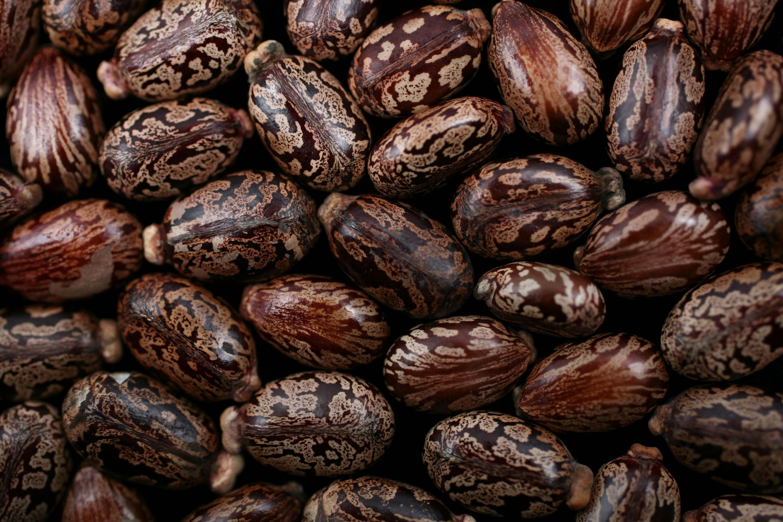 Castor beans.
