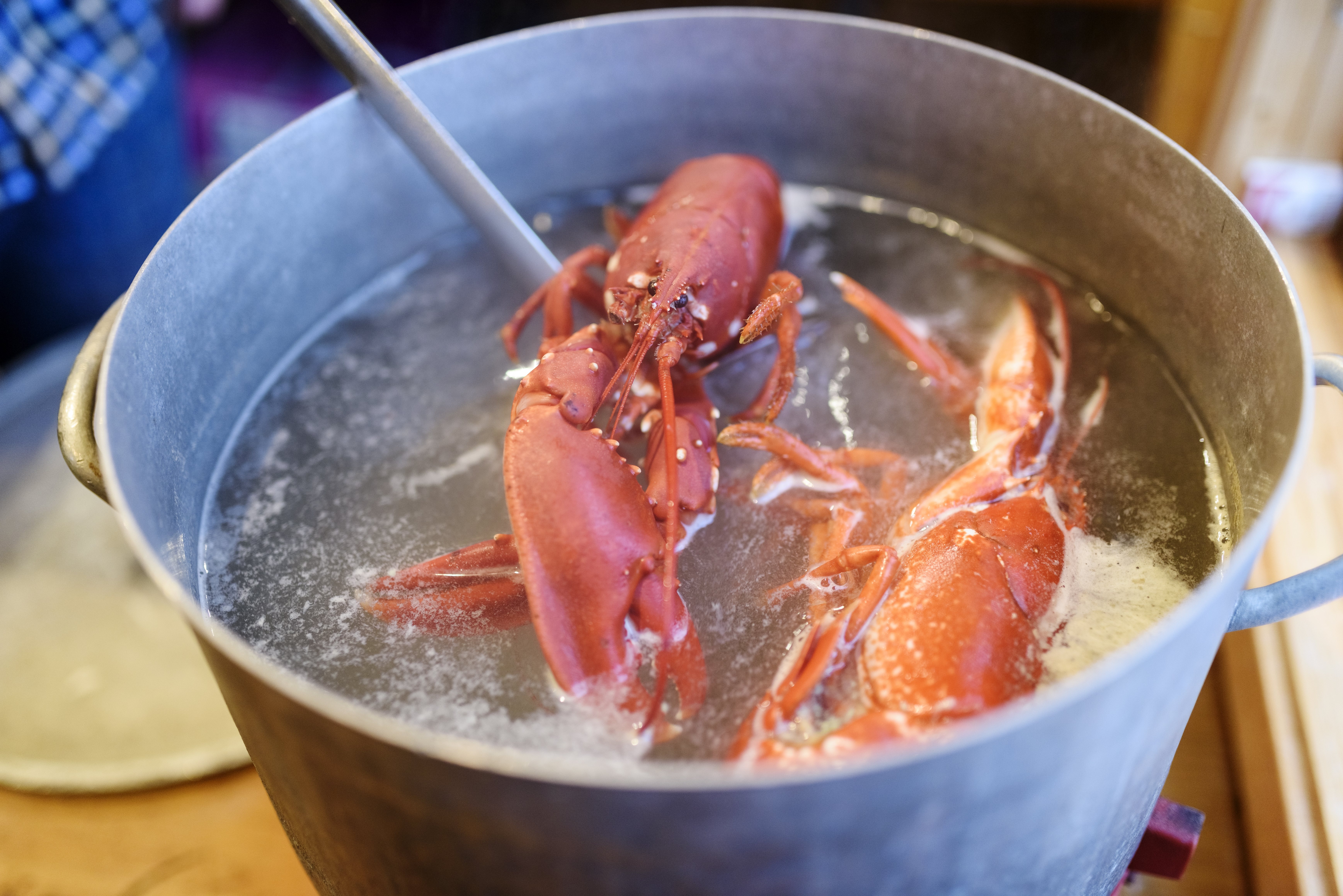Boiling lobsters