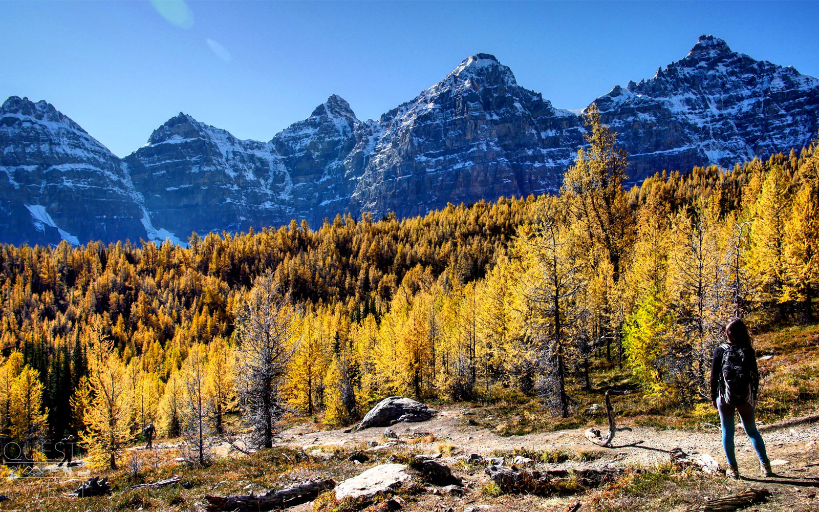 In the fall, Banff National park's Larch Valley is adorned with mesmerizing foliage.                               The larch trees' needles turn a bright gold for a few weeks each year, attracting thousands of tourists. Larch Valley, found through a trail above Moraine Lake, is further enhanced by its striking backdrop of white glaciers and towering peaks.