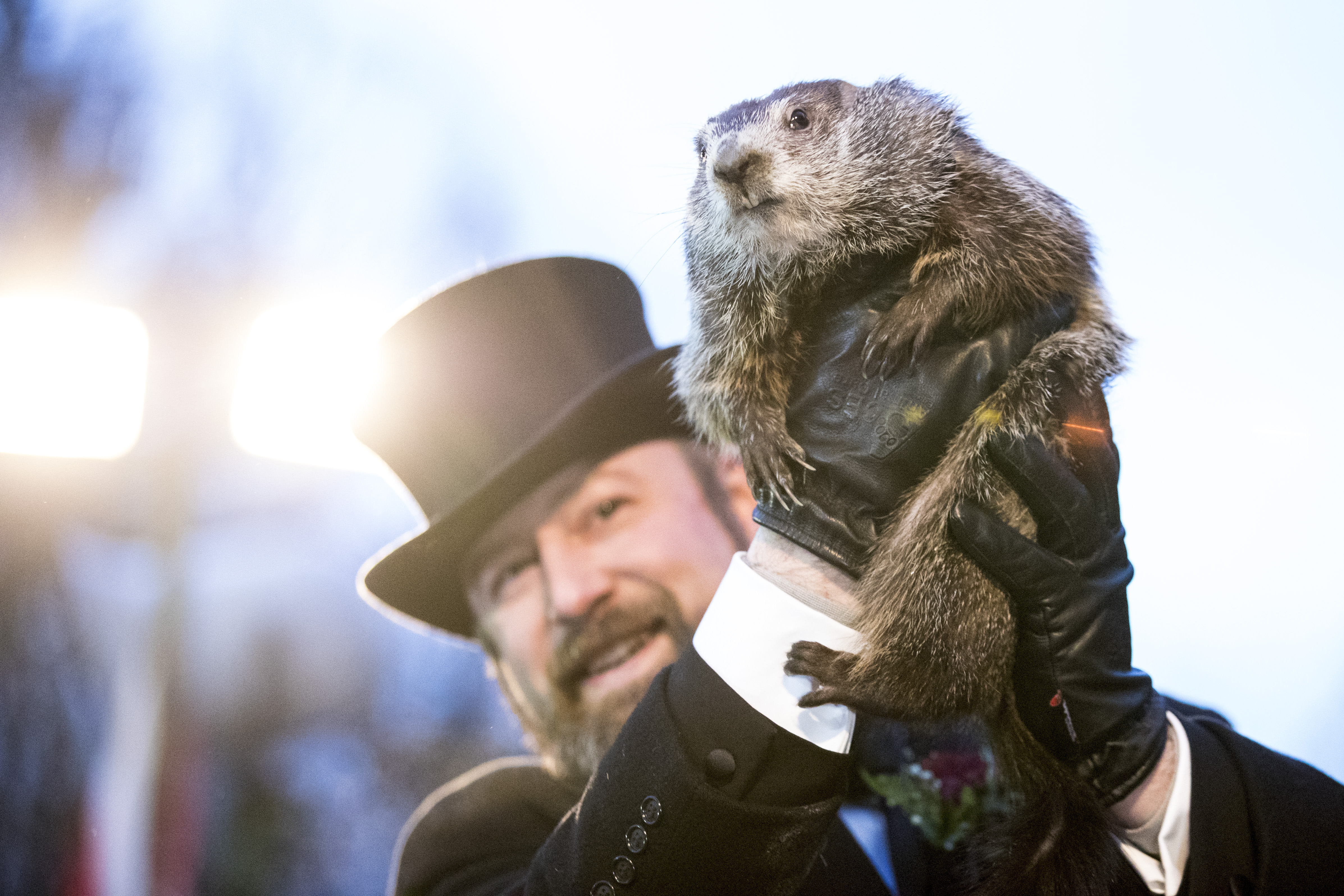 Punxsutawney Phil is held up by his handler for the crowd to see during the ceremonies for Groundhog day on February 2, 2018 in Punxsutawney, Pennsylvania.
