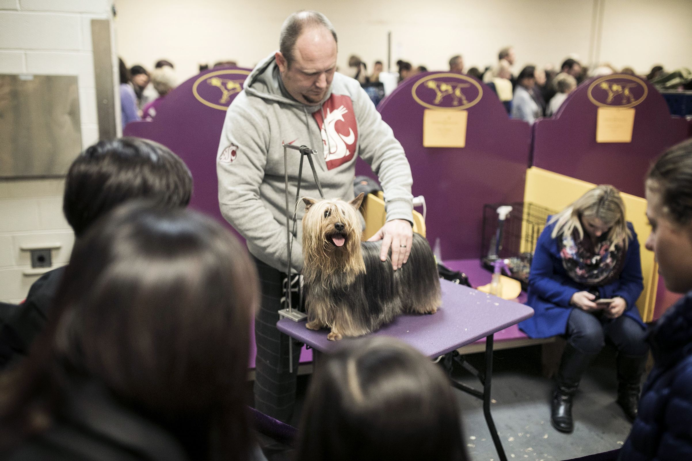 A dog competing in the 142nd Westminster Kennel Club Dog Show in New York on Feb. 12, 2018.