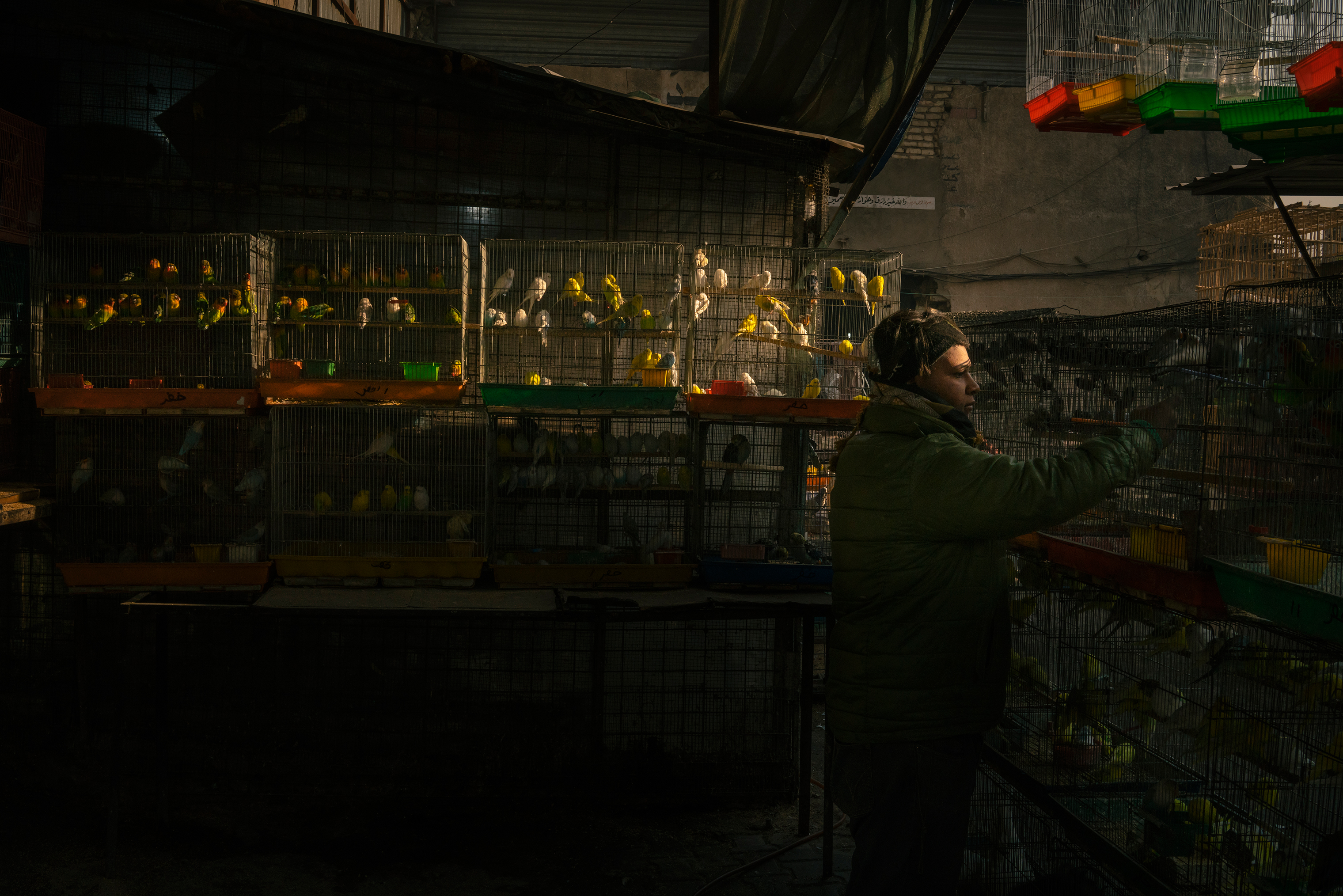 A bird stall at an animal market in Baghdad on Jan. 31.
