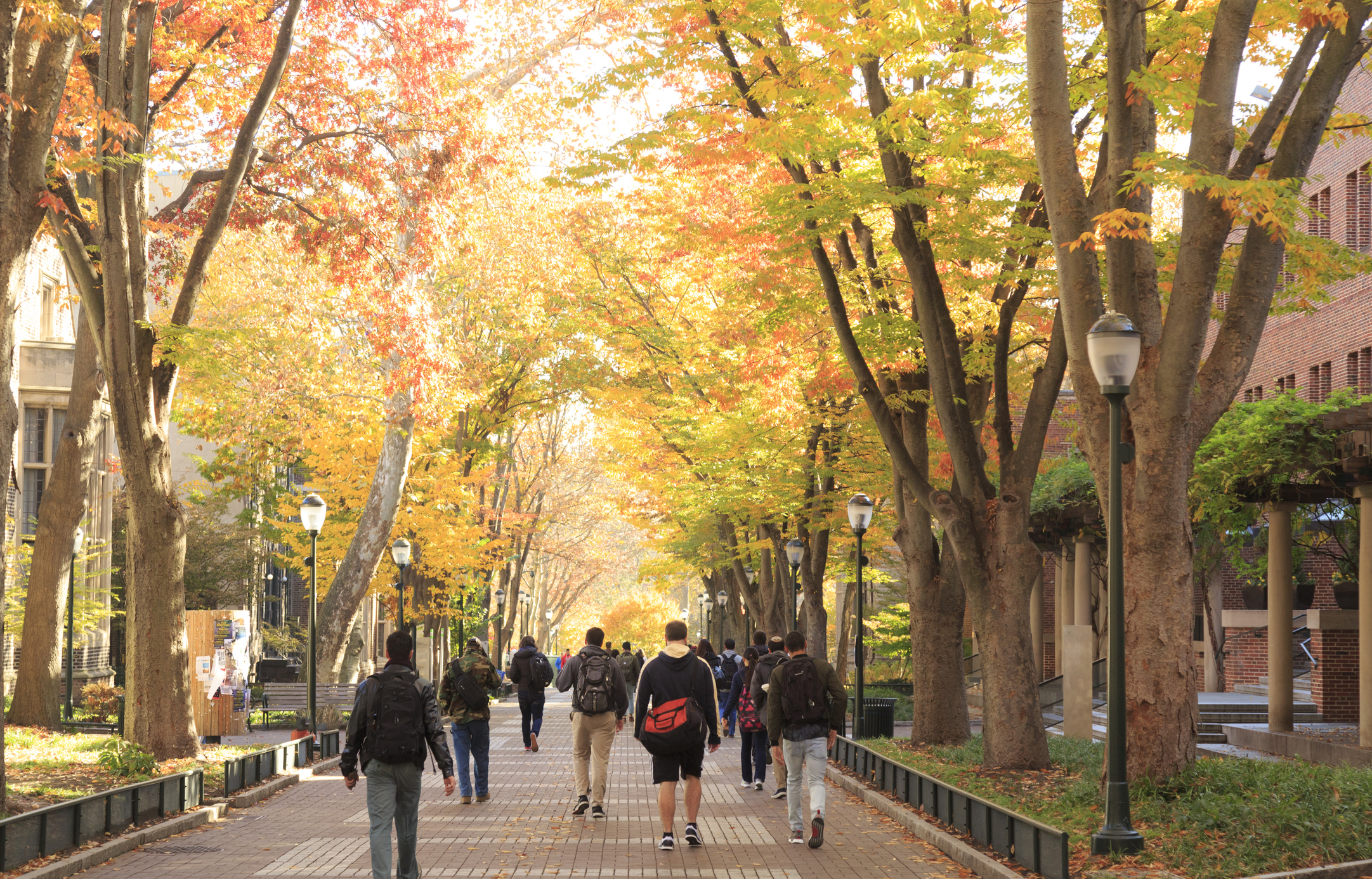 Locust Walk with students in fall, University of Pennsylvania, University City area, Philadelphia, PA, USA