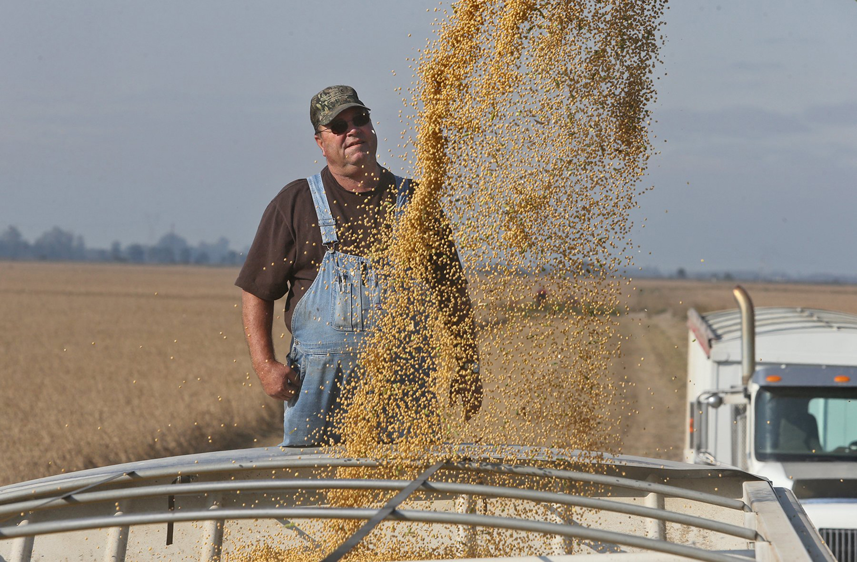 Truck driver Marion Howard watches soy beans load into his truck on October 1