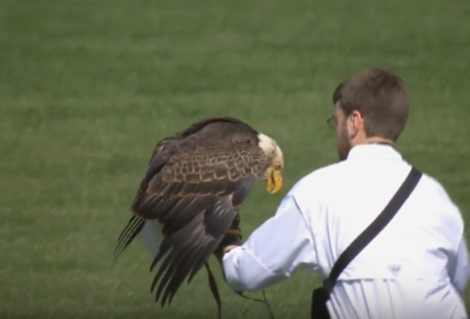 A bald eagle landed on Mariners pitcher James Paxton