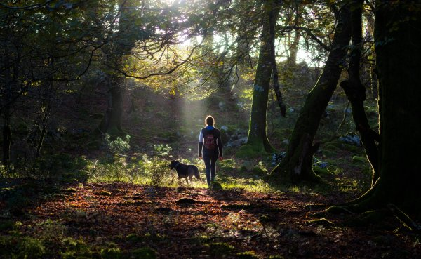 Action Alert Save Urban Forests Now American Forests >> The Benefits Of Forest Bathing Time