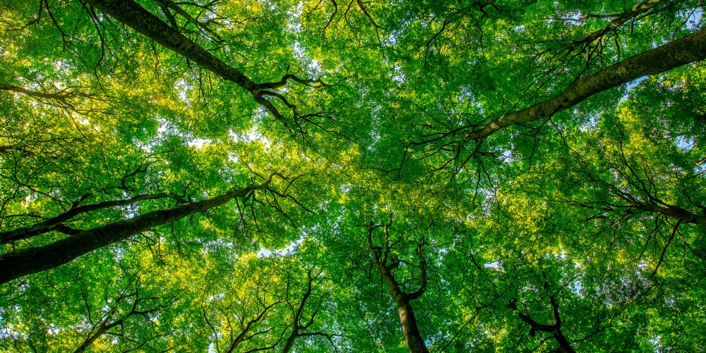 The Benefits Of Forest Bathing Time