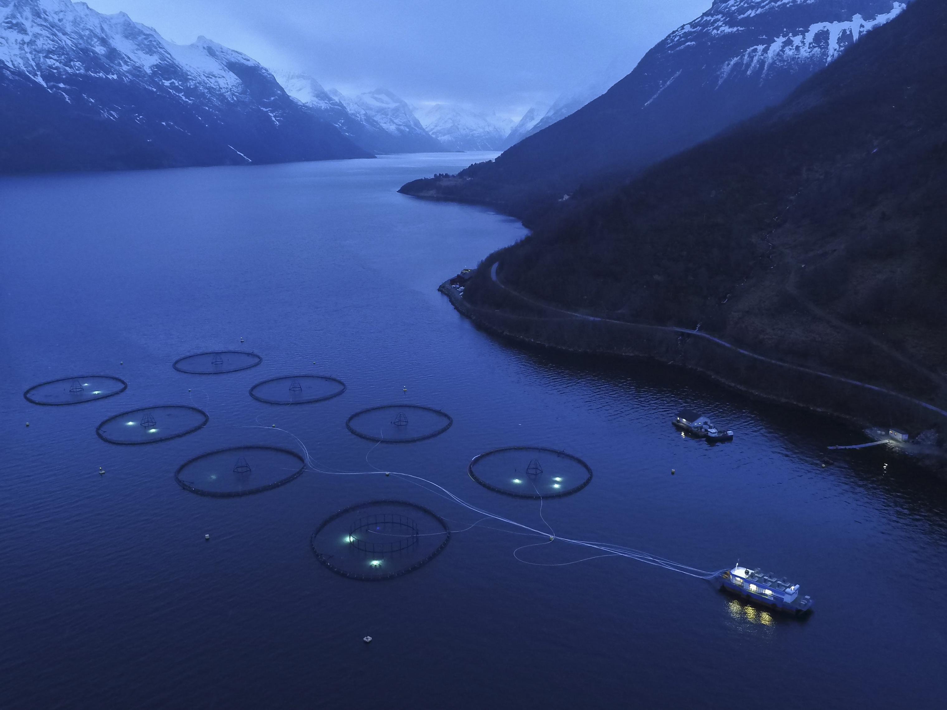 Sagelva salmon farm, on Hjorrund Fjord, with 200,000 atlantic salmon in each of eight pens. Shot by drone in 2016.