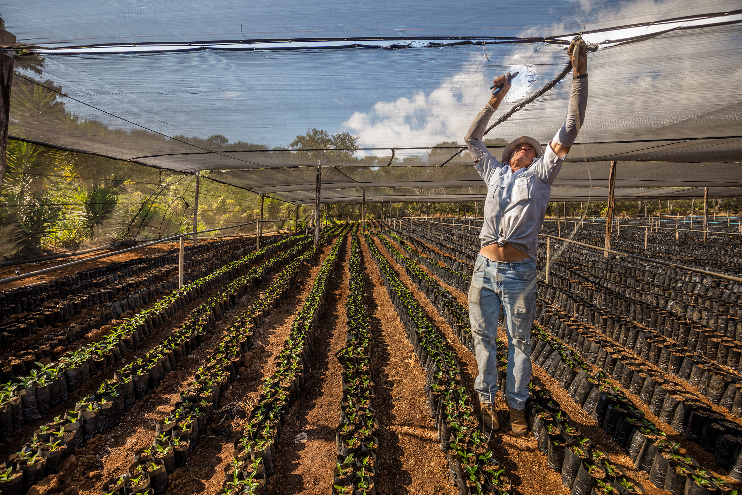 A worker fixes netting at a nursery that grows disease-resistant varieties of coffee in Bajo Corrales, Costa Rica