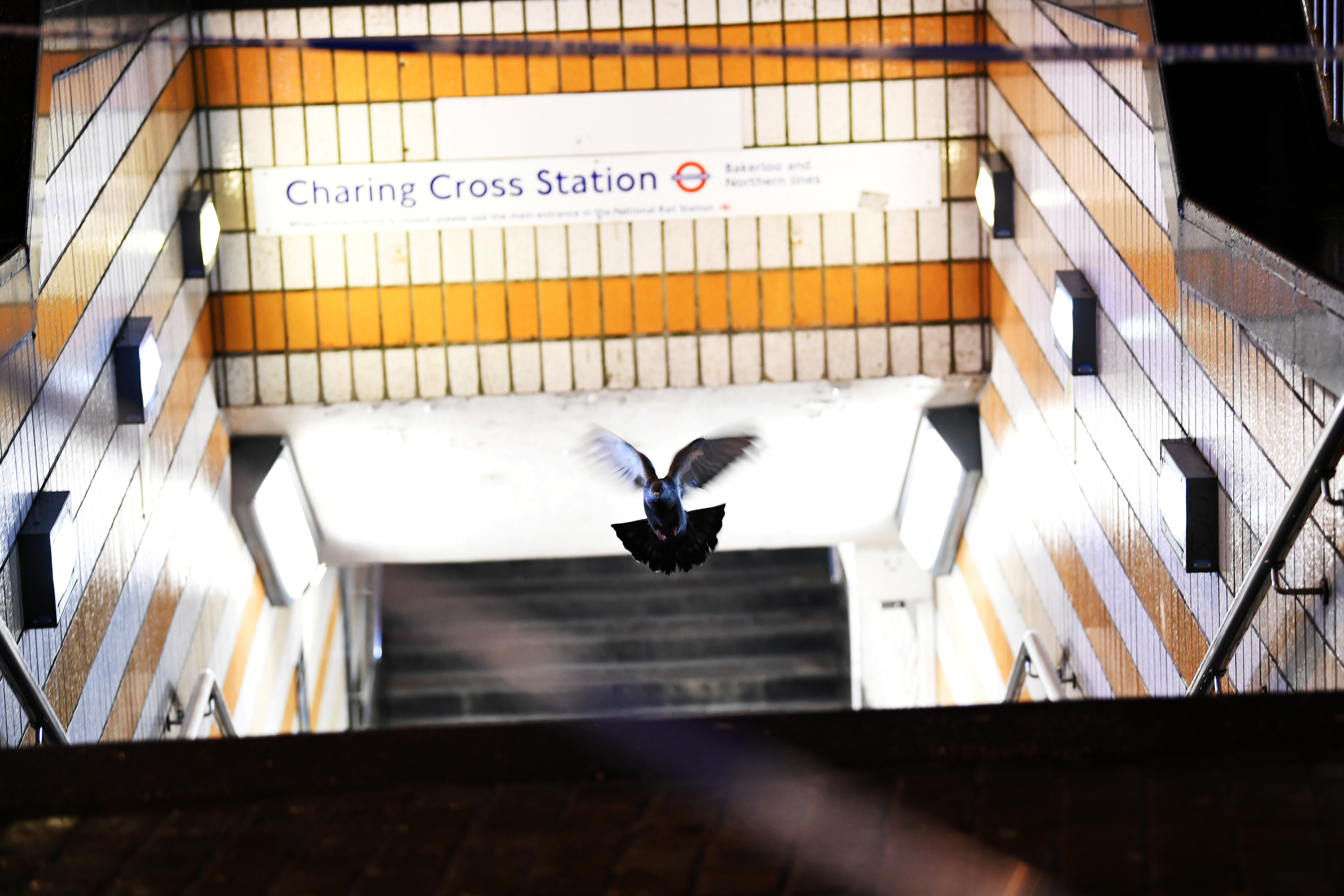 A pigeon flies out of a pedestrian subway at Charing Cross station after it was shut due to a gas leak, in London, Britain, Jan. 23, 2018.