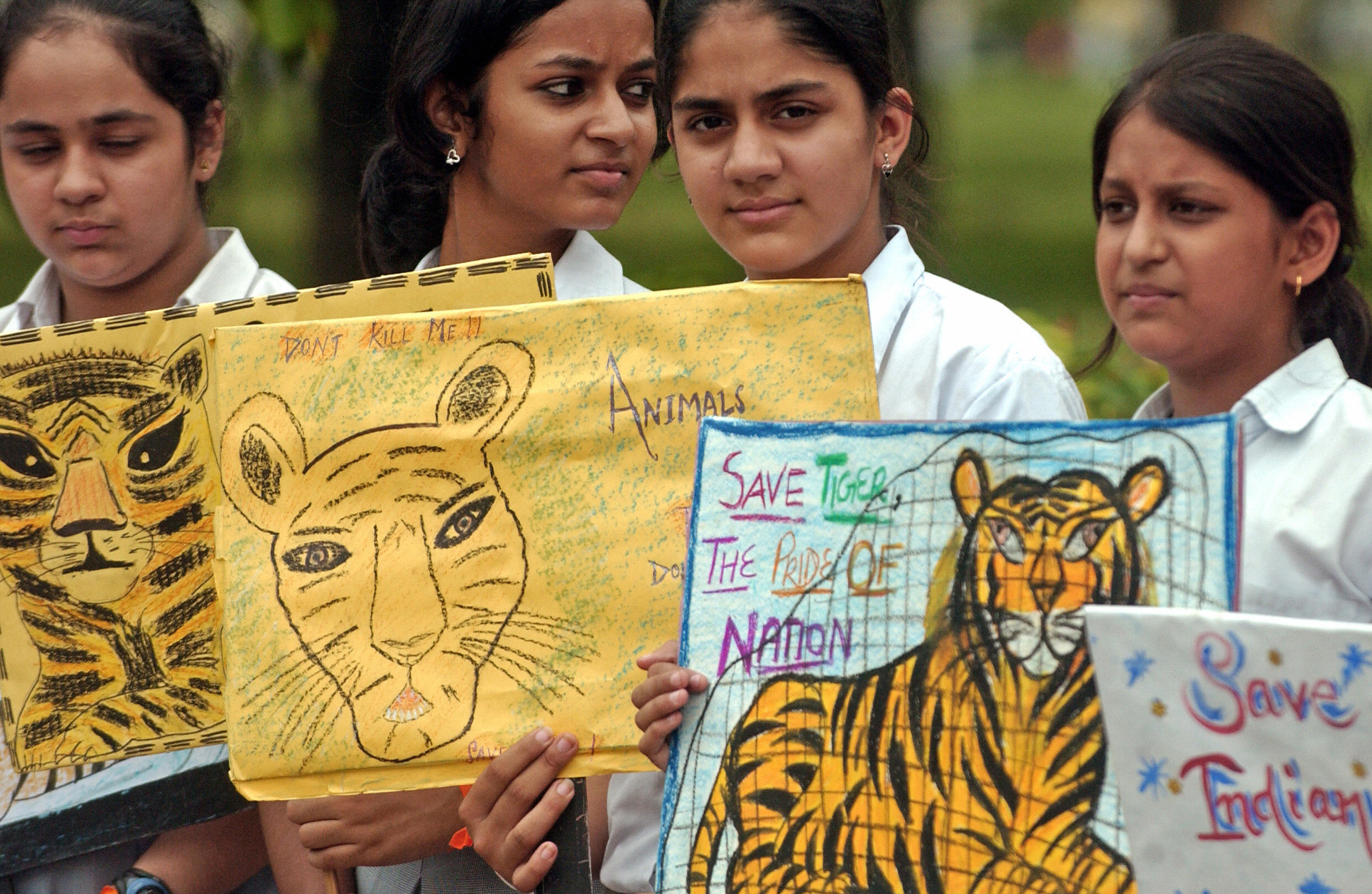 Indian school children hold placards during a rally held to raise awareness for the protection of tigers and forests in India, in New Delhi, July 11, 2006.